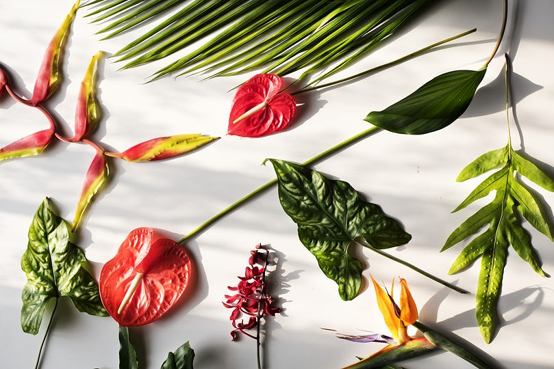 Tropical flowers on white background