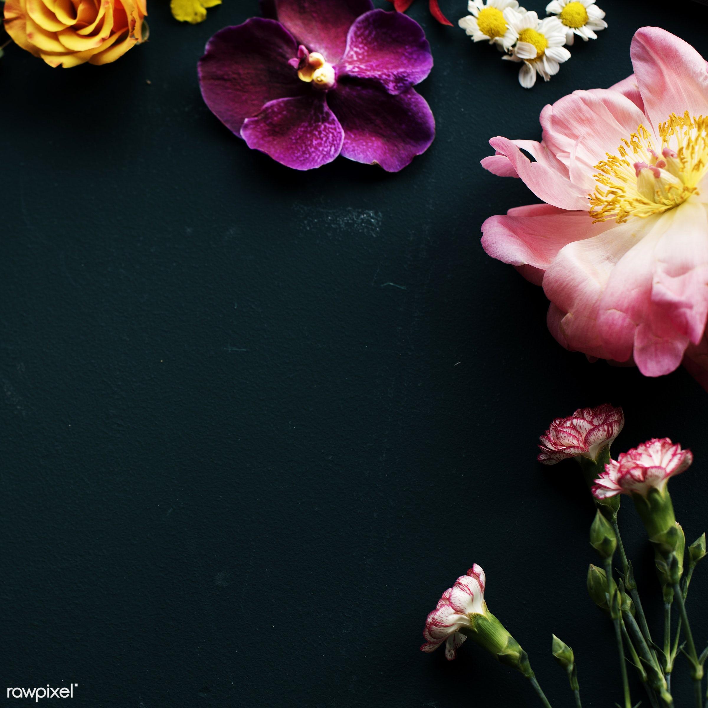 plant, copy space, blank, decoration, flora, refreshment, leisure, florist, recreational, fresh, natural, flower