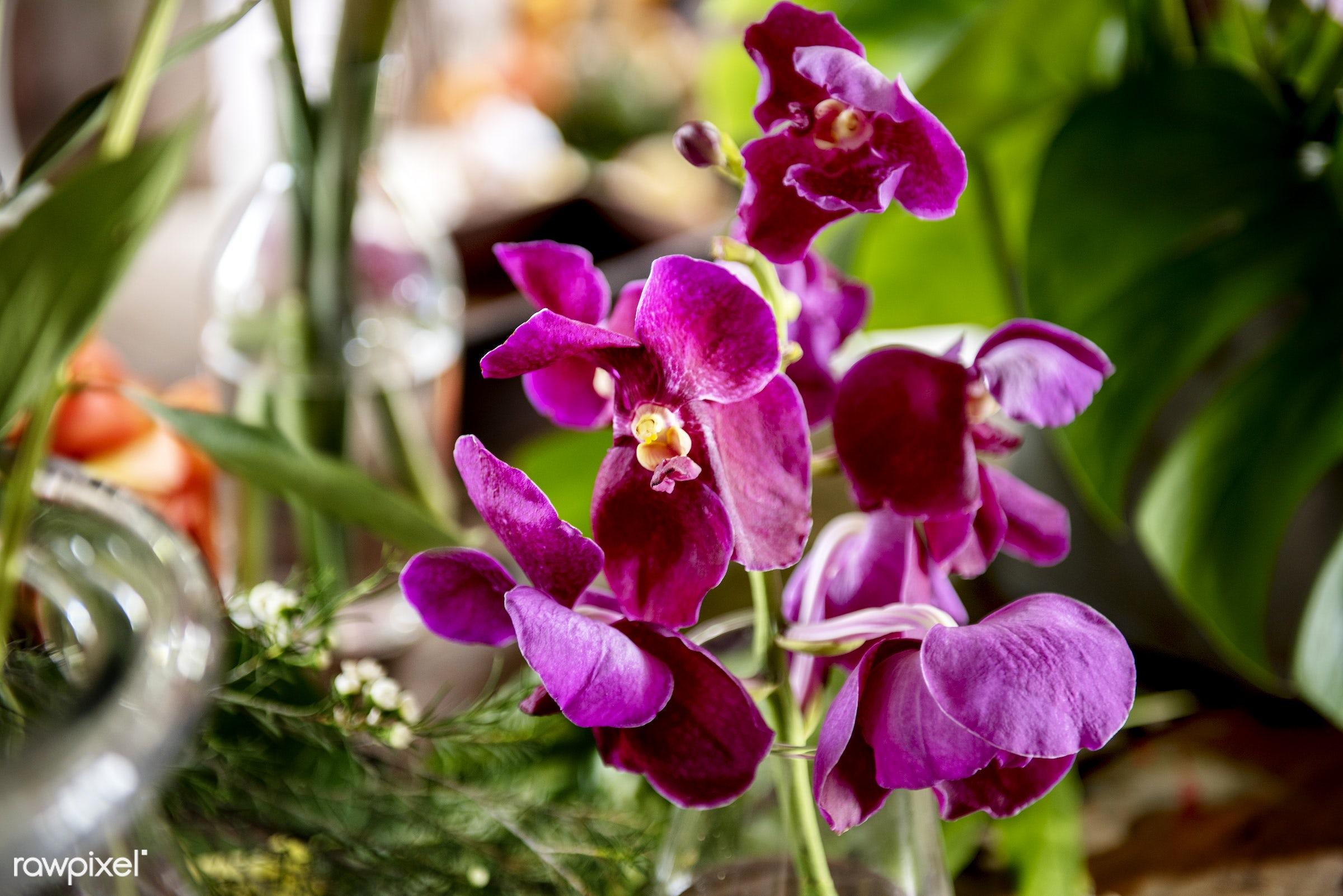 plant, decoration, flora, refreshment, leisure, florist, recreational, fresh, natural, flower
