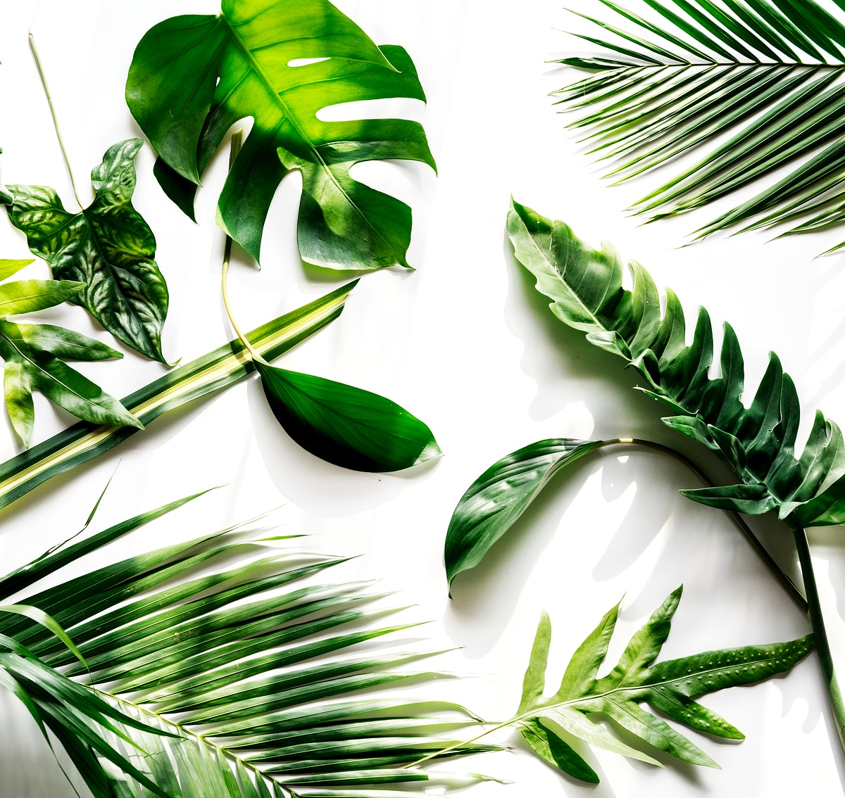 Tropical Green Leaves On White Background Tropical vector realistic green leaves seamless pattern pink background. download premium image of tropical green leaves on white background 104206