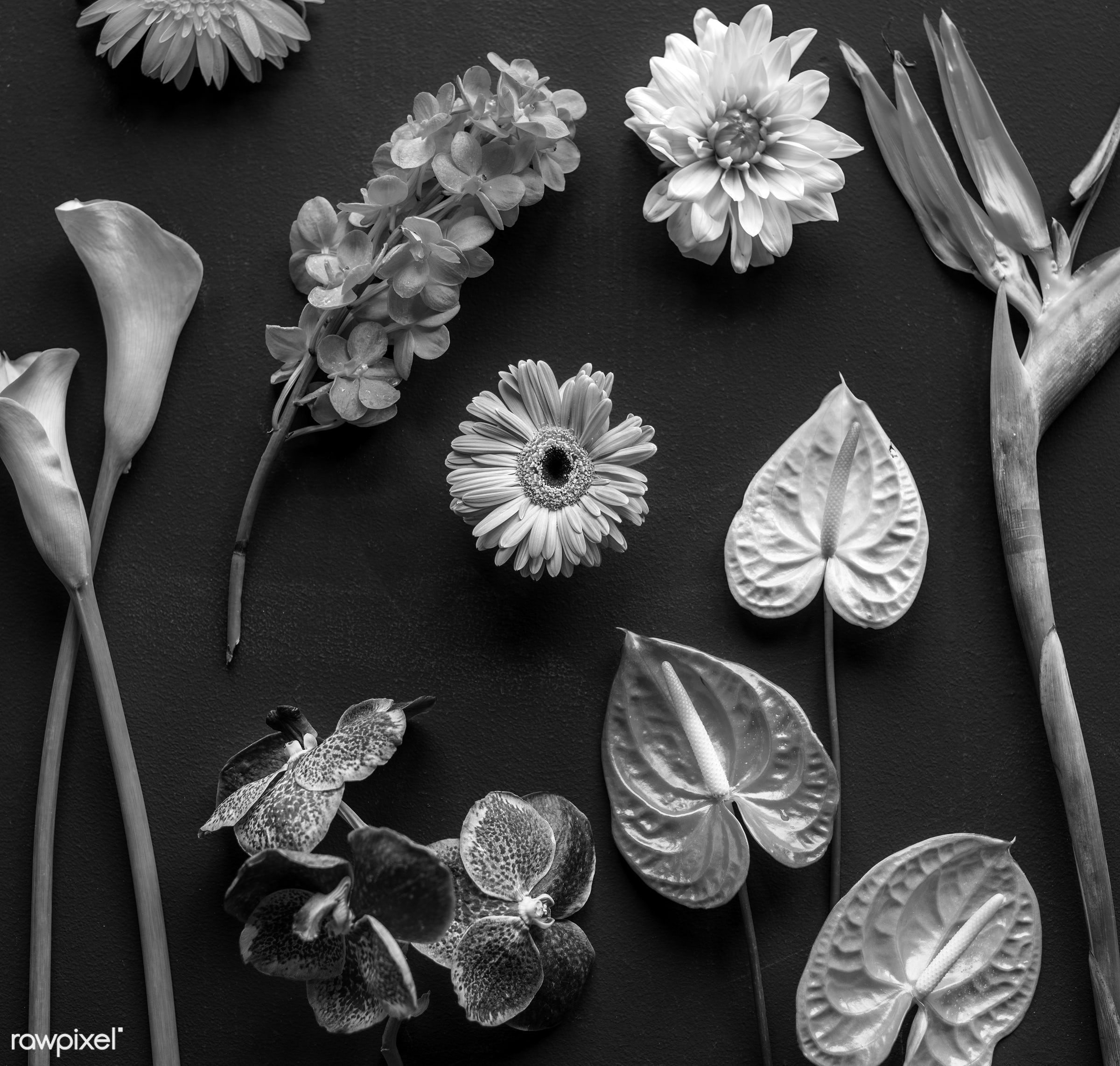 Black and white image of tropical flowers - plant, bouquet, concept, decorative, botany, leaf, botanical, leaves, romance,...