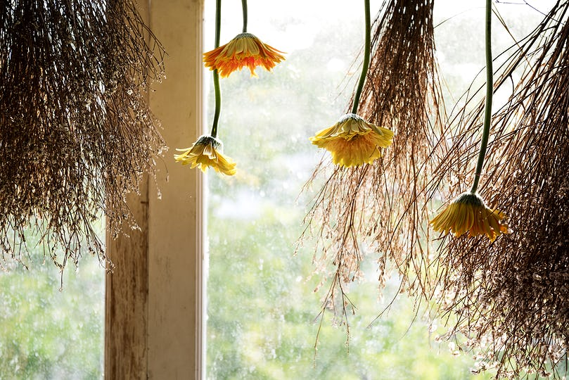 Flowers hanging in a window