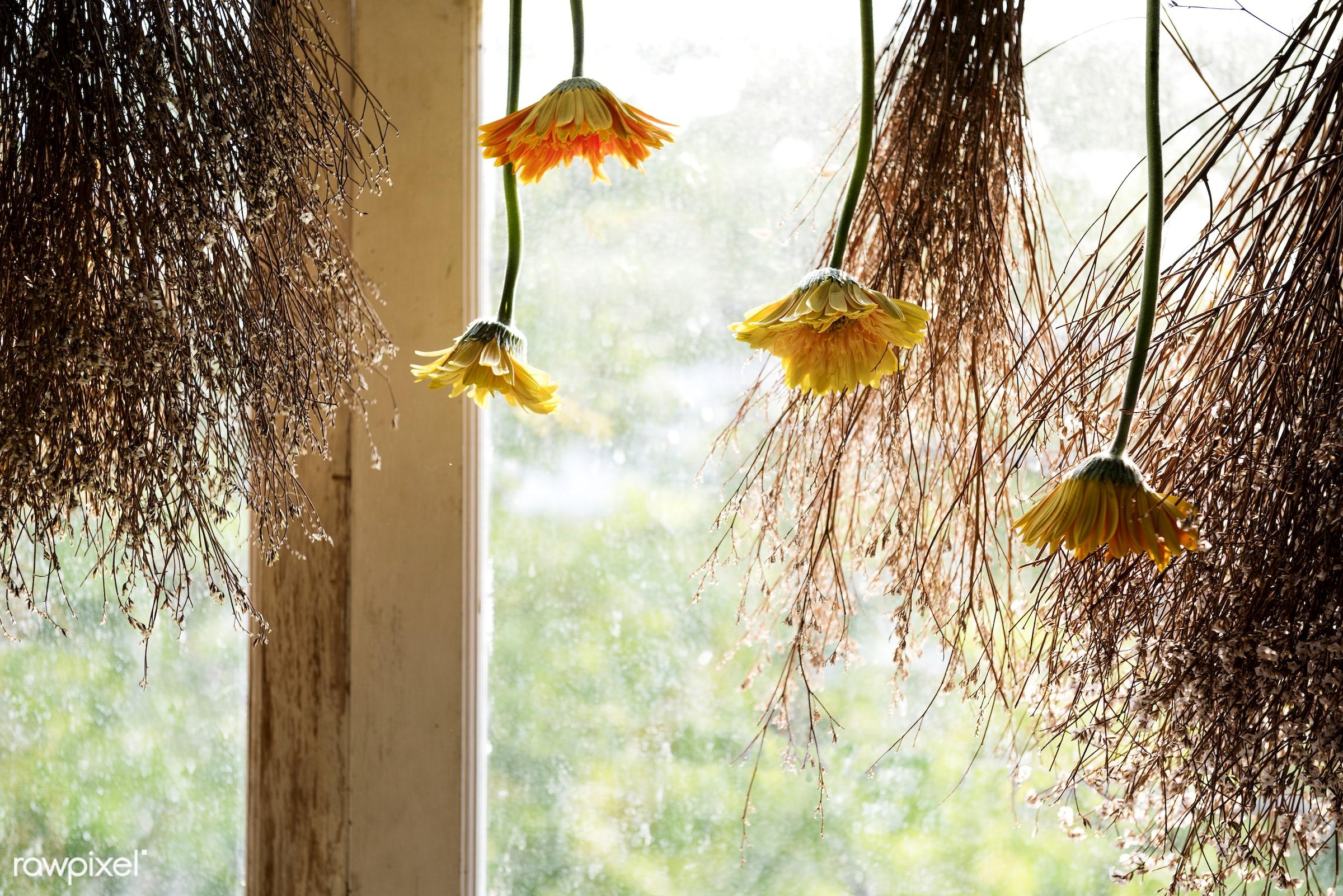Flowers hanging in a window - plant, bouquet, shop, concept, decorative, botany, leaf, botanical, romance, blossom, decor,...