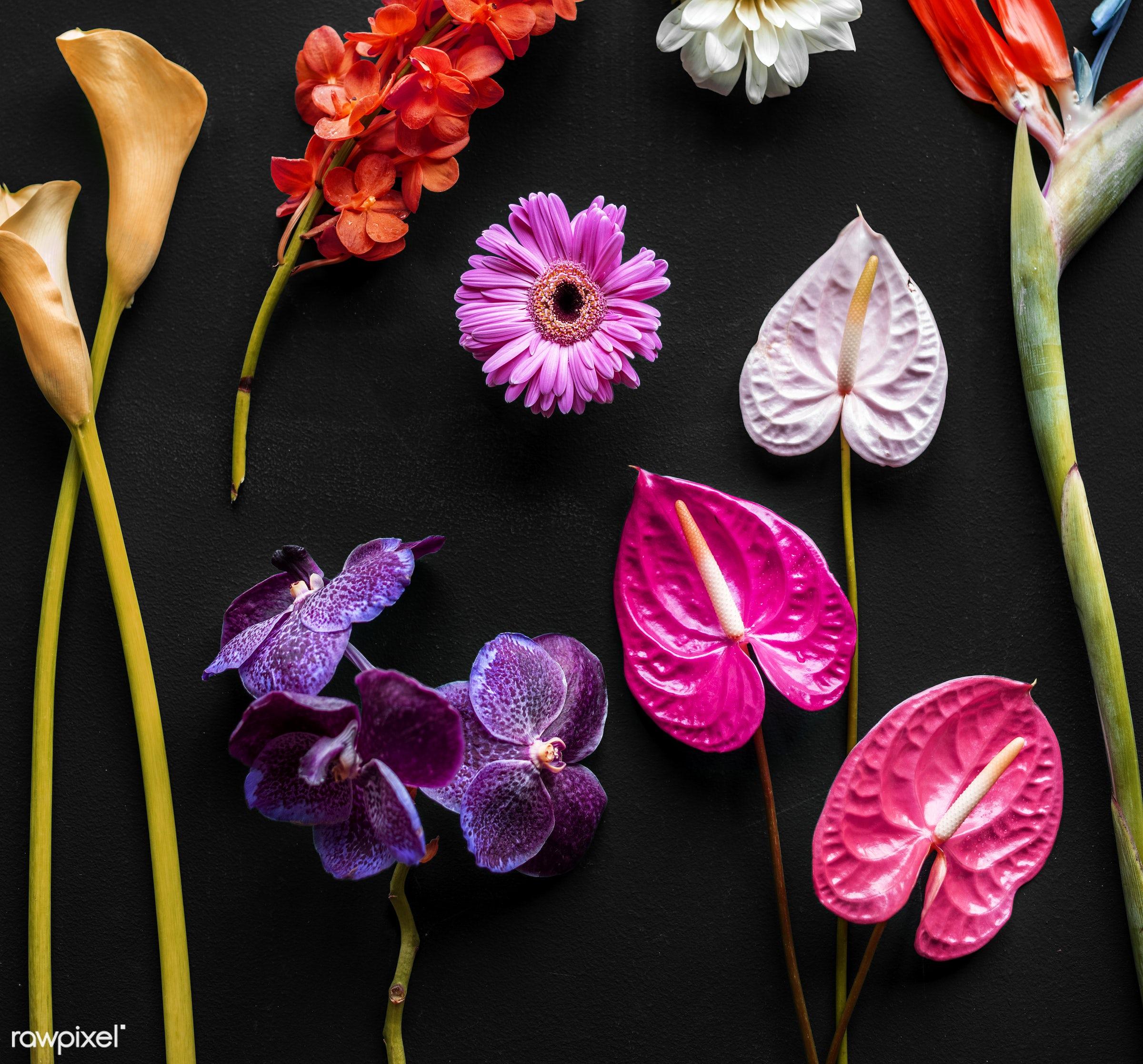Colorful tropical flowers on black background - plant, bouquet, concept, decorative, botany, leaf, botanical, leaves,...
