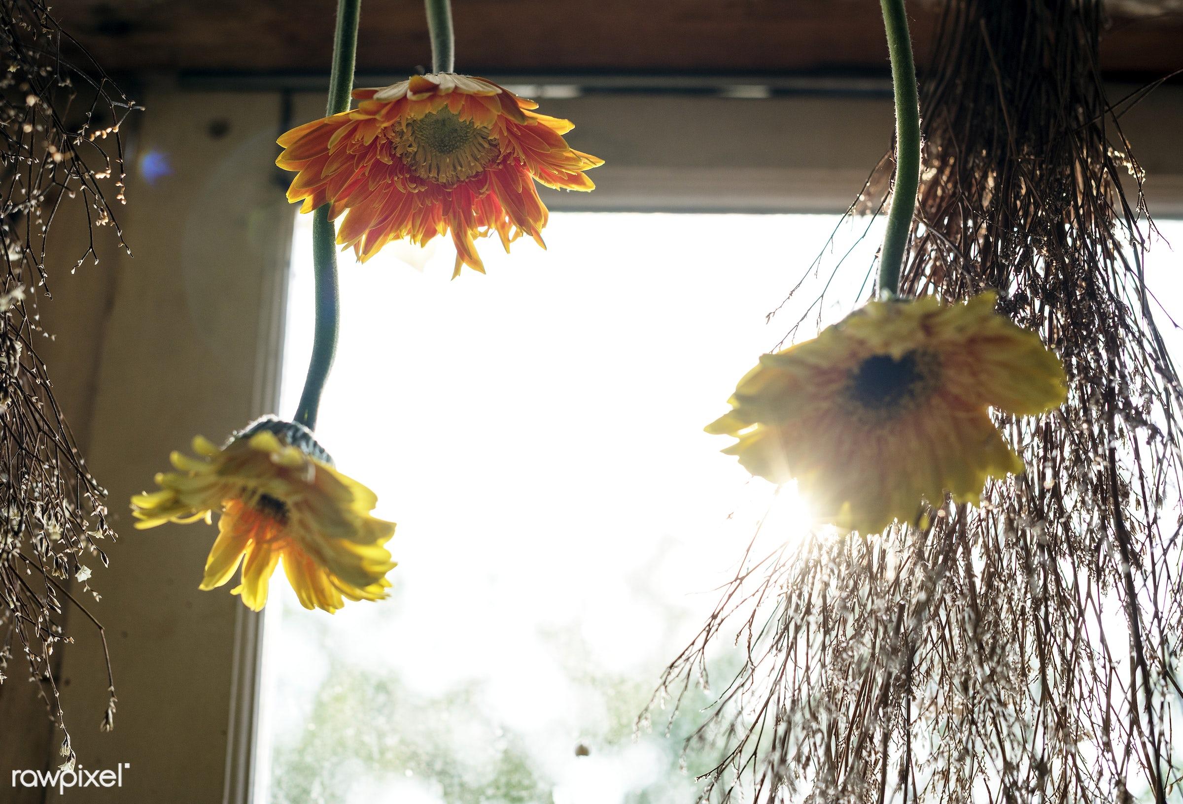 plant, bouquet, concept, decorative, botany, leaf, botanical, leaves, romance, spring, blossom, florists, hanging, nature,...