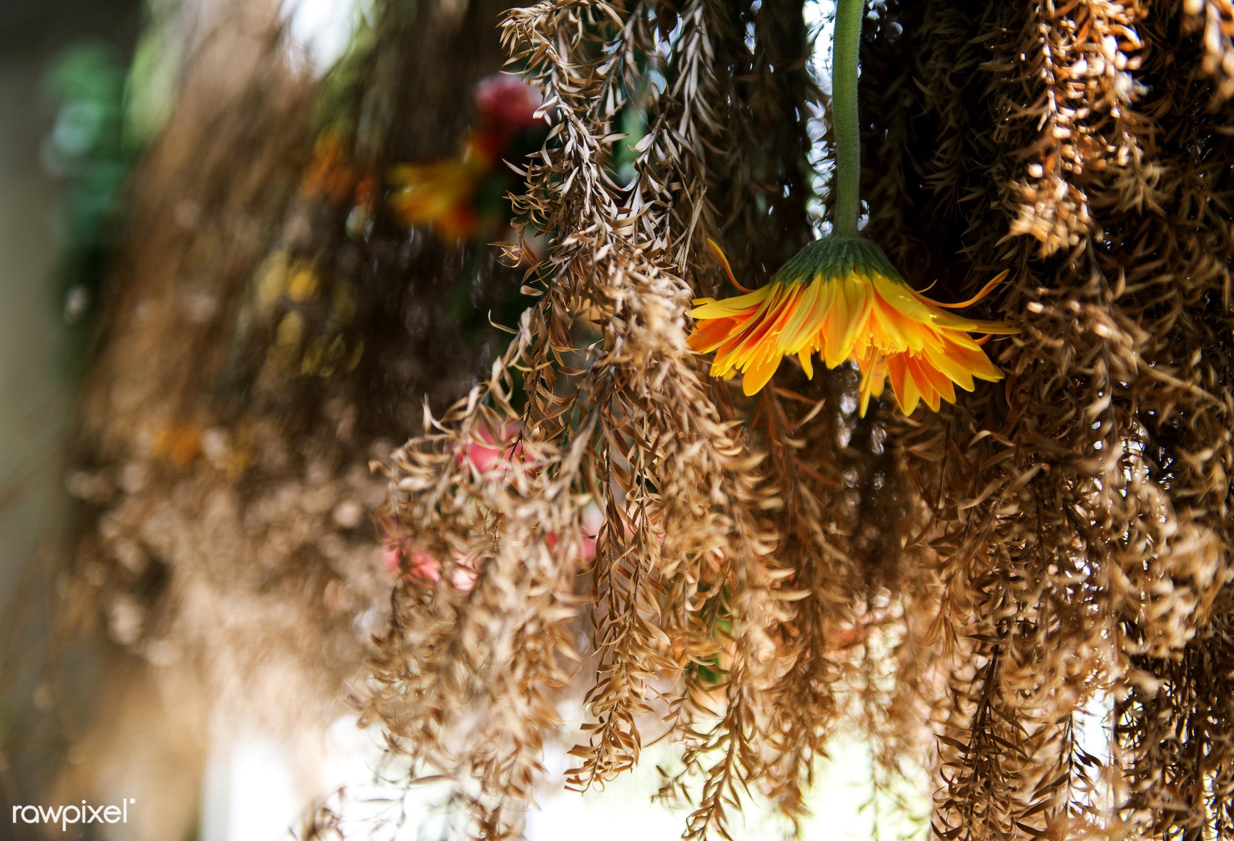 plant, dried flower, dried plant, flora, decoration, refreshment, leisure, florist, hanging, recreational, dried, fresh,...