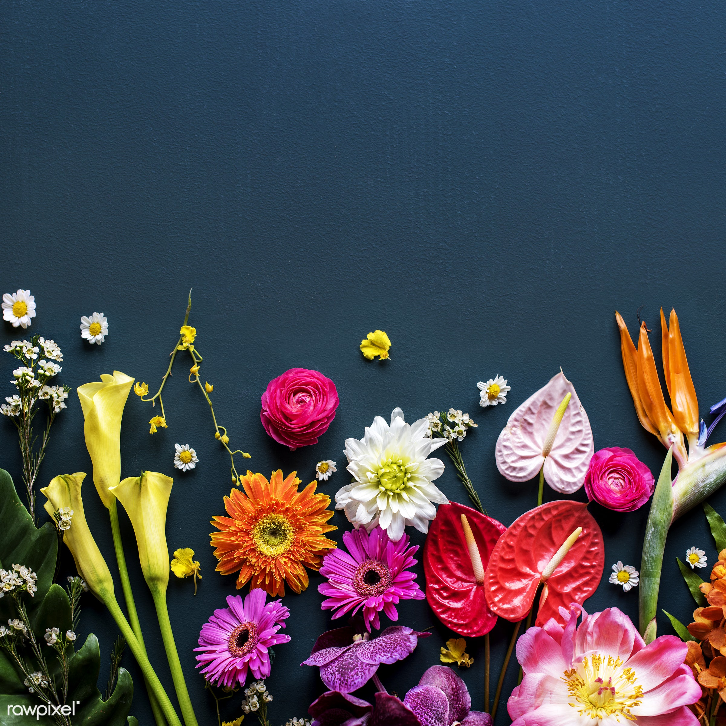 Colorful tropical flowers on black background - plant, bouquet, concept, decorative, botany, leaf, botanical, leaves,...