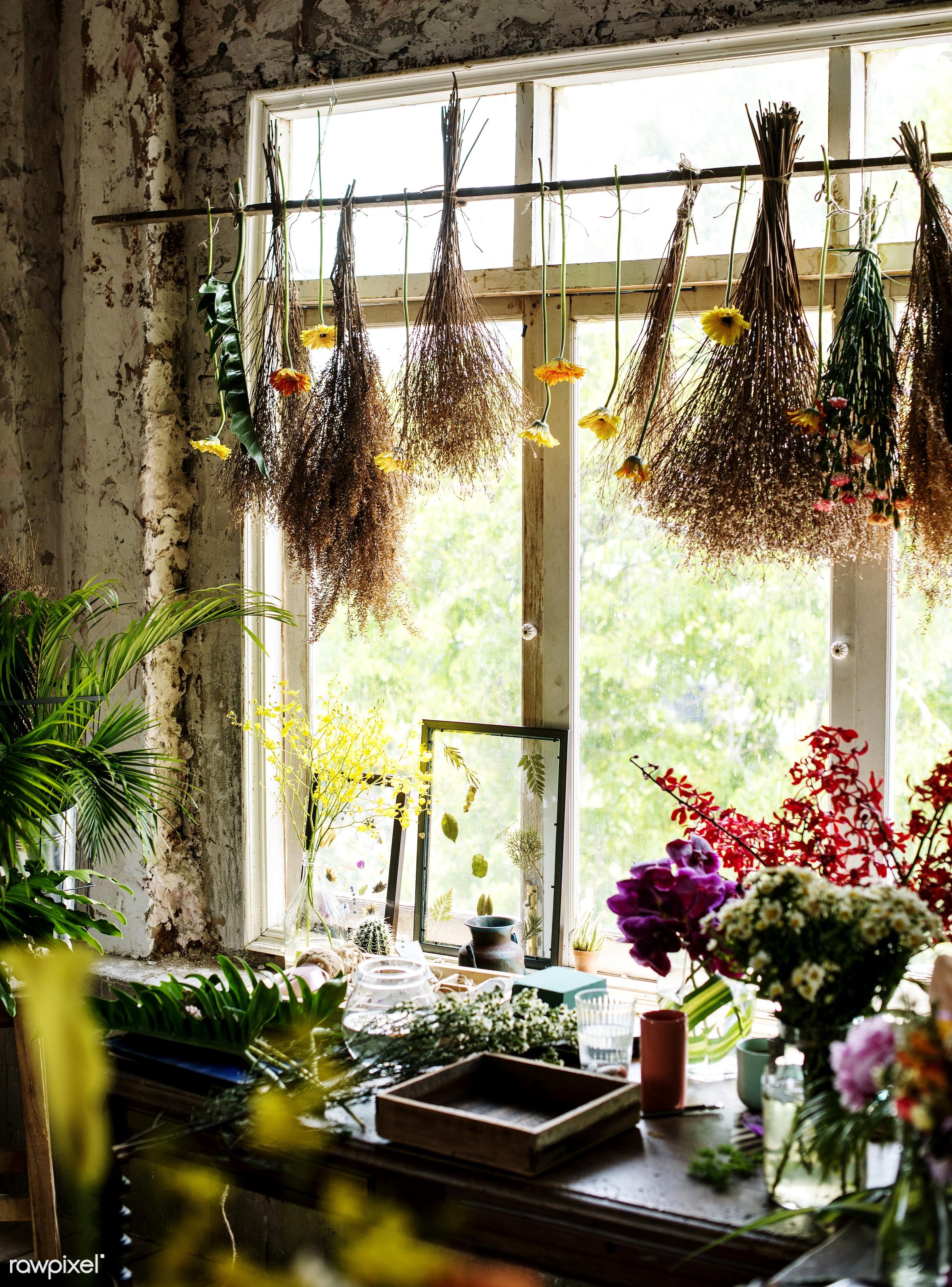 plant, shop, dried plant, dried flower, hanging, dried, fresh, flower, decoration, flora, refreshment, leisure, florist,...