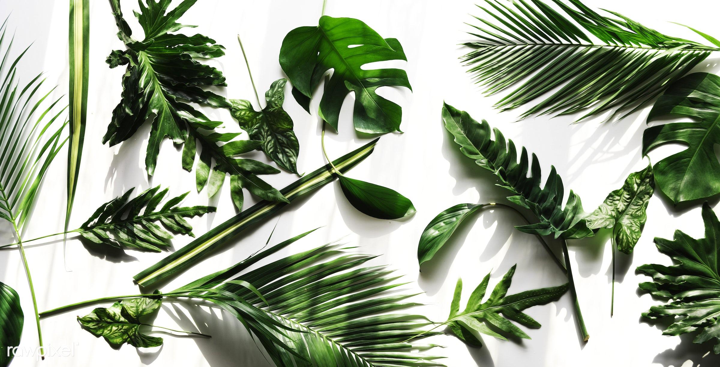 plant, isolated, botany, decoration, flora, refreshment, leisure, leaf, florist, recreational, fresh, natural