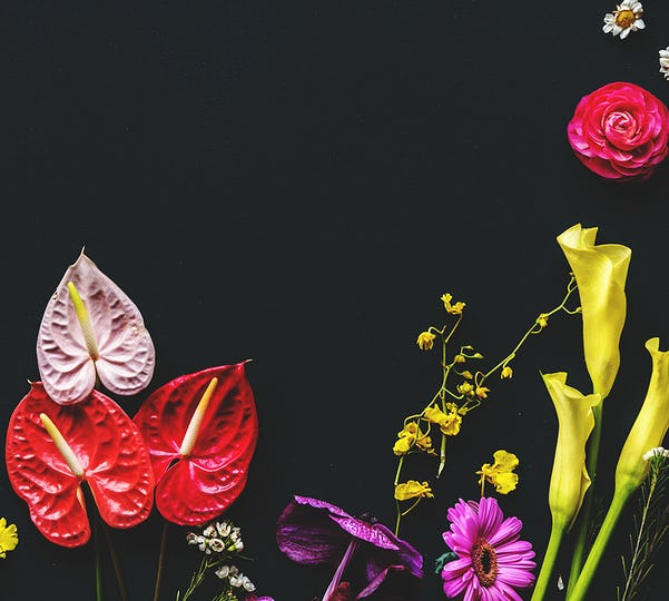 Colorful flowers on black background