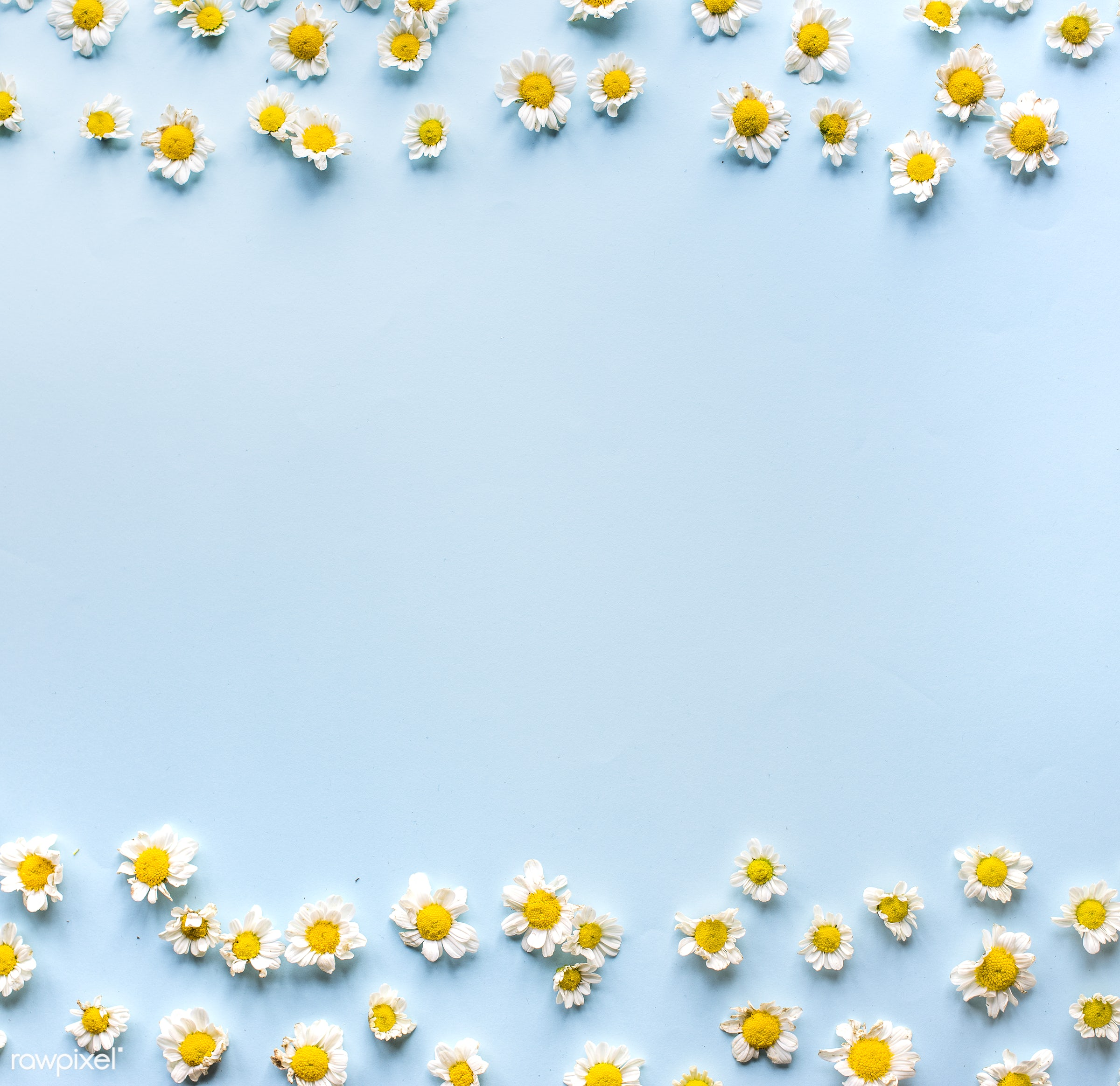 minimal, yellow, spring, nature, composition, flowers, flower, isolated, decorate, lay, white, frame, pattern, summer,...