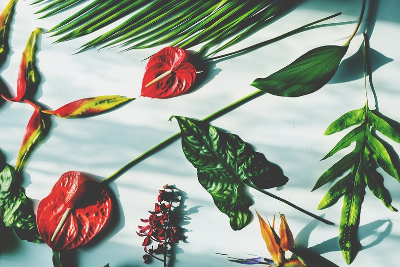 Tropical flowers and leaves on white background