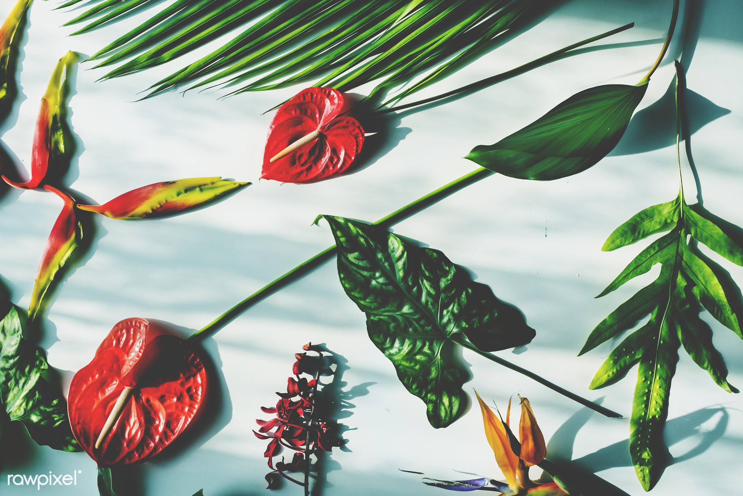 Tropical flowers and leaves on white background - plant, bouquet, concept, decorative, botany, leaf, botanical, leaves,...