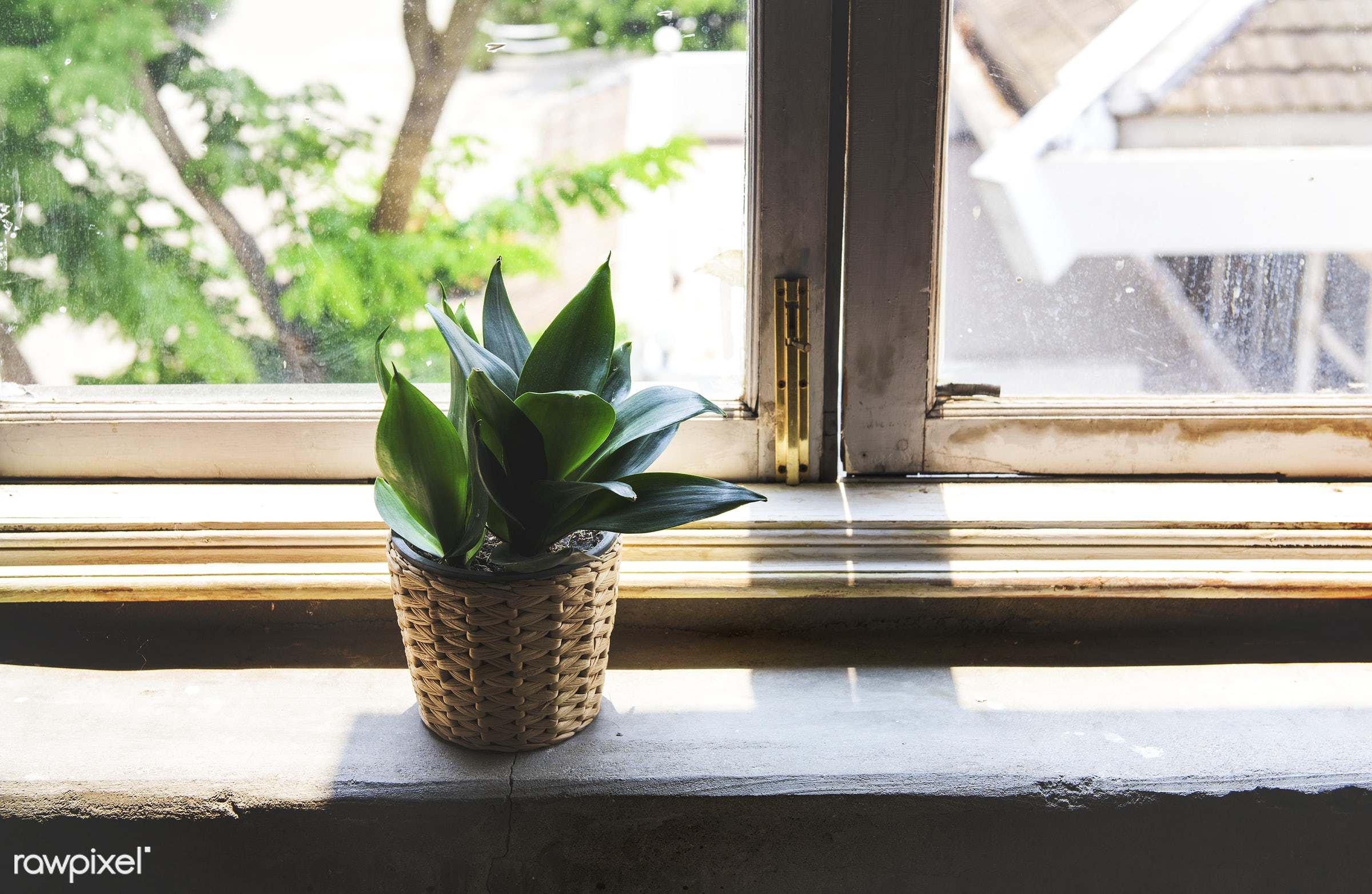 plant, interior, indoor, decorative, bright, house, leaf, pot, nature, style, fresh, windowsill, decoration, potted, green,...