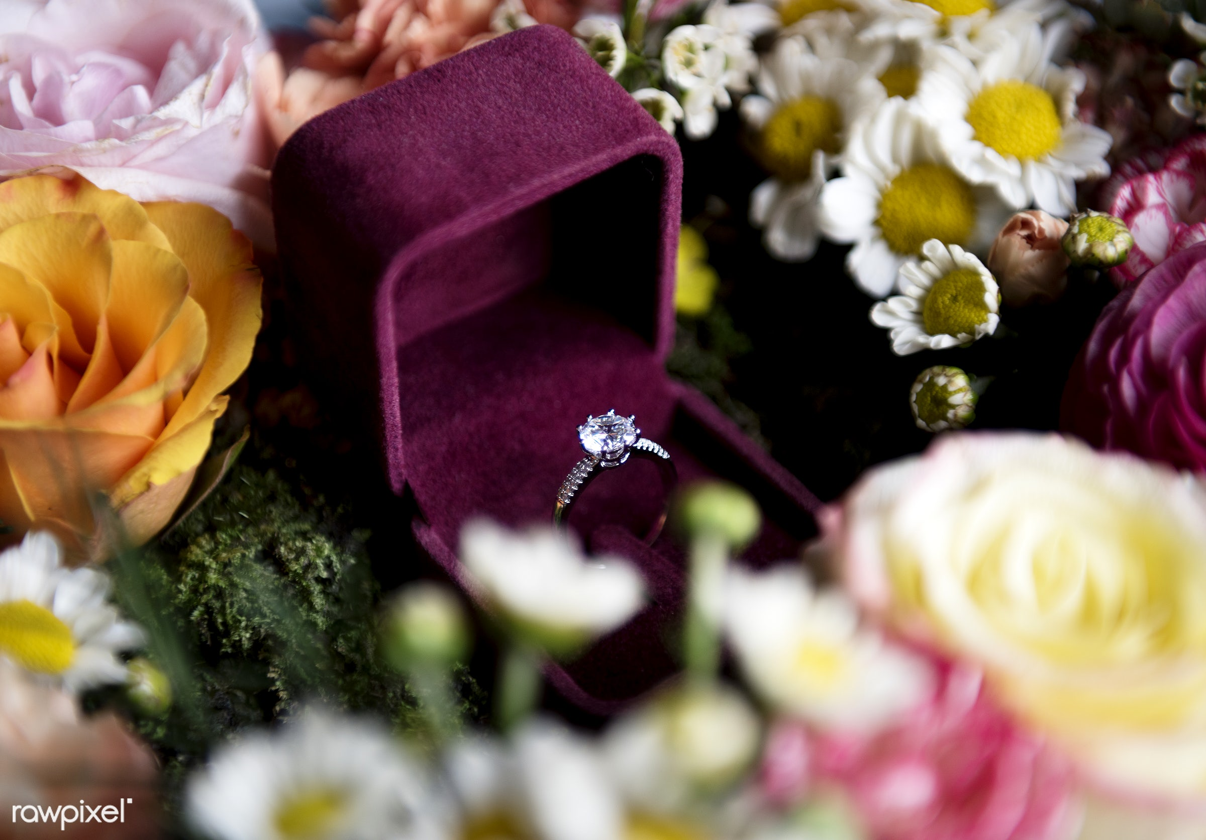 nobody, daisy, jewel, flowers, objects, closeup, ring, decoration, red box, prepare, ceremony, marriage, arrangement,...