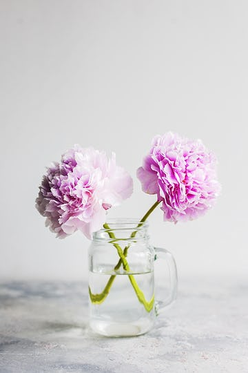 Decorative pink carnations in a jug