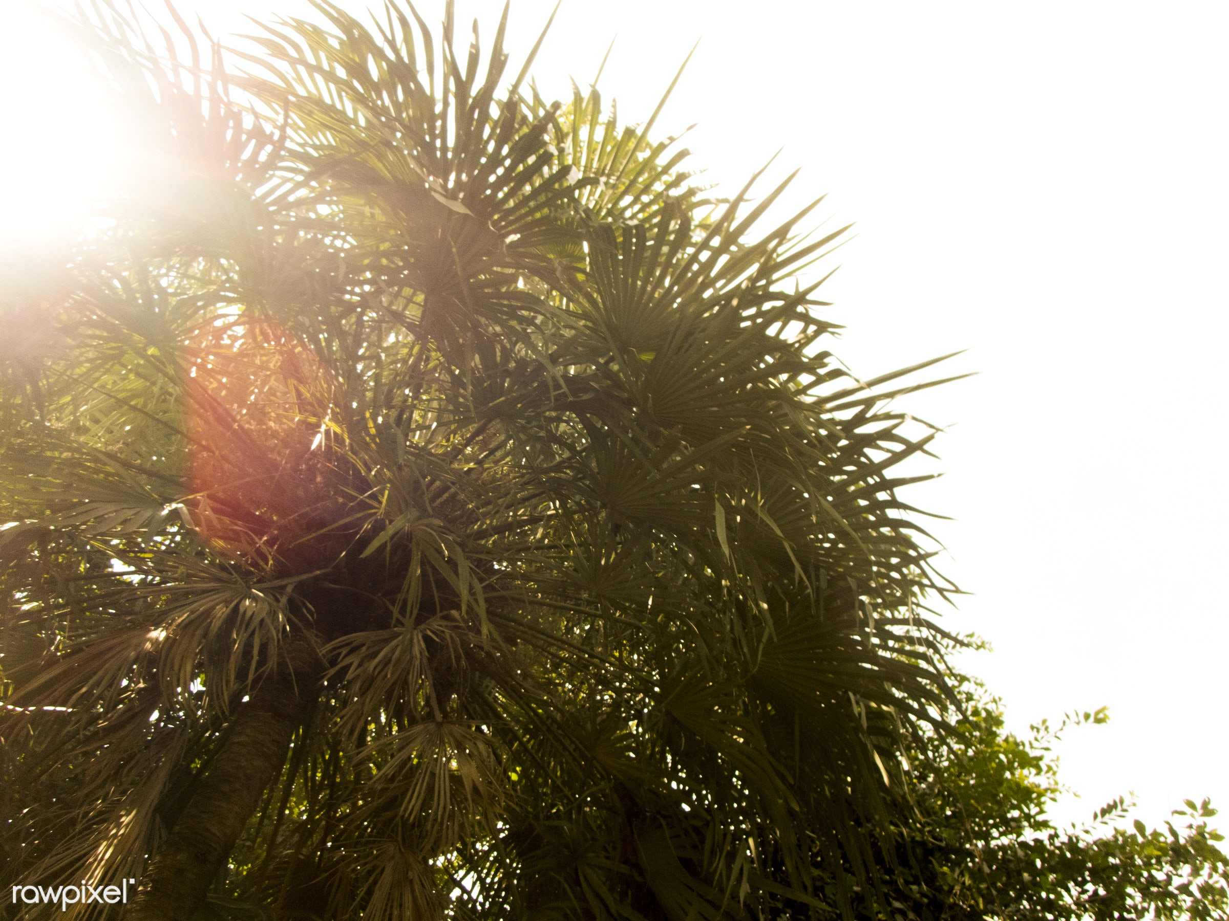 sunlight, environmental, palm tree, sky, environment, tree, nature, sunny, below, low angle view, sumner, summer