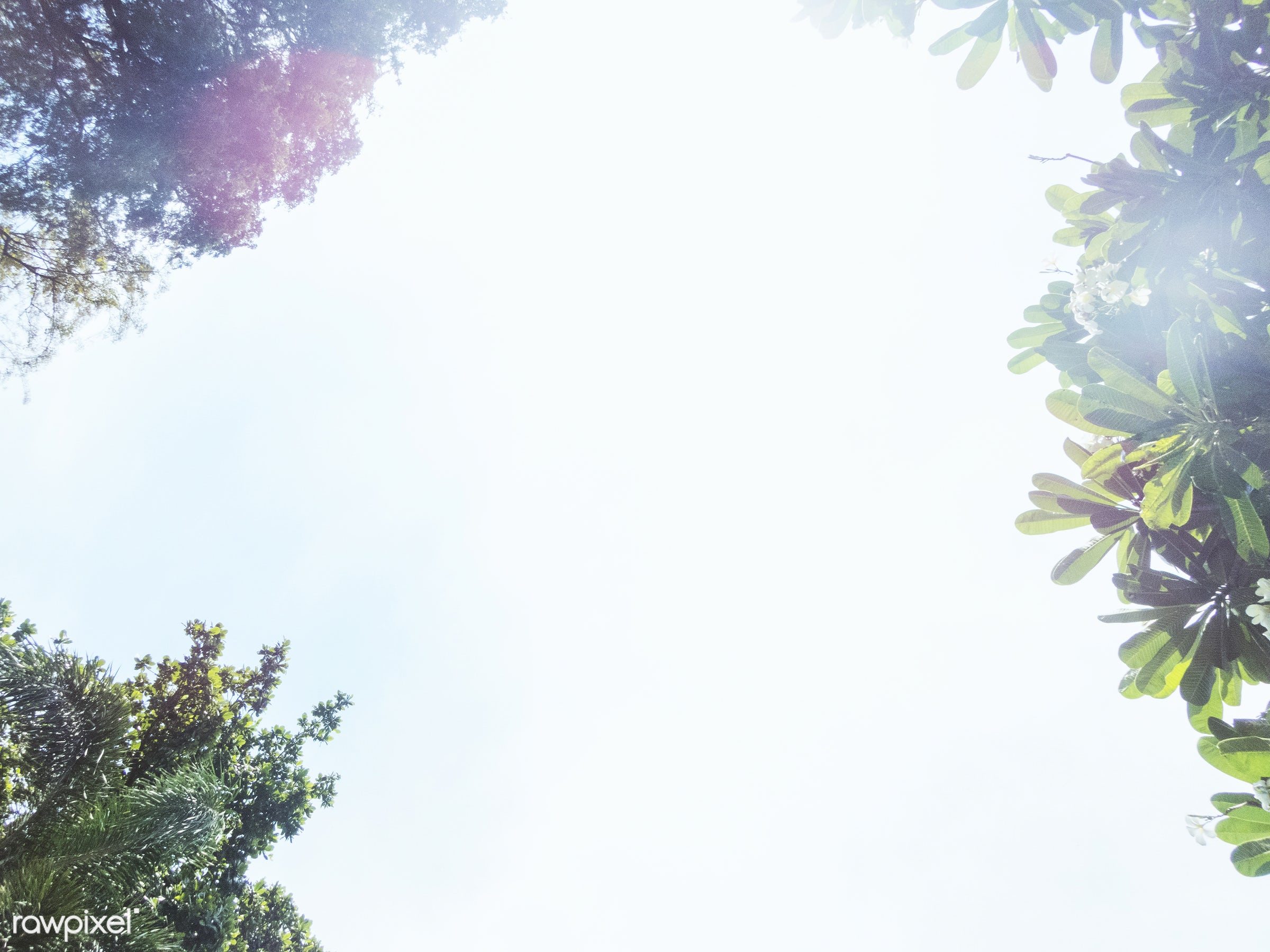 sky, summer, nature, sunny, palm tree, below, environment, environmental, low angle view, sumner, sunlight, tree