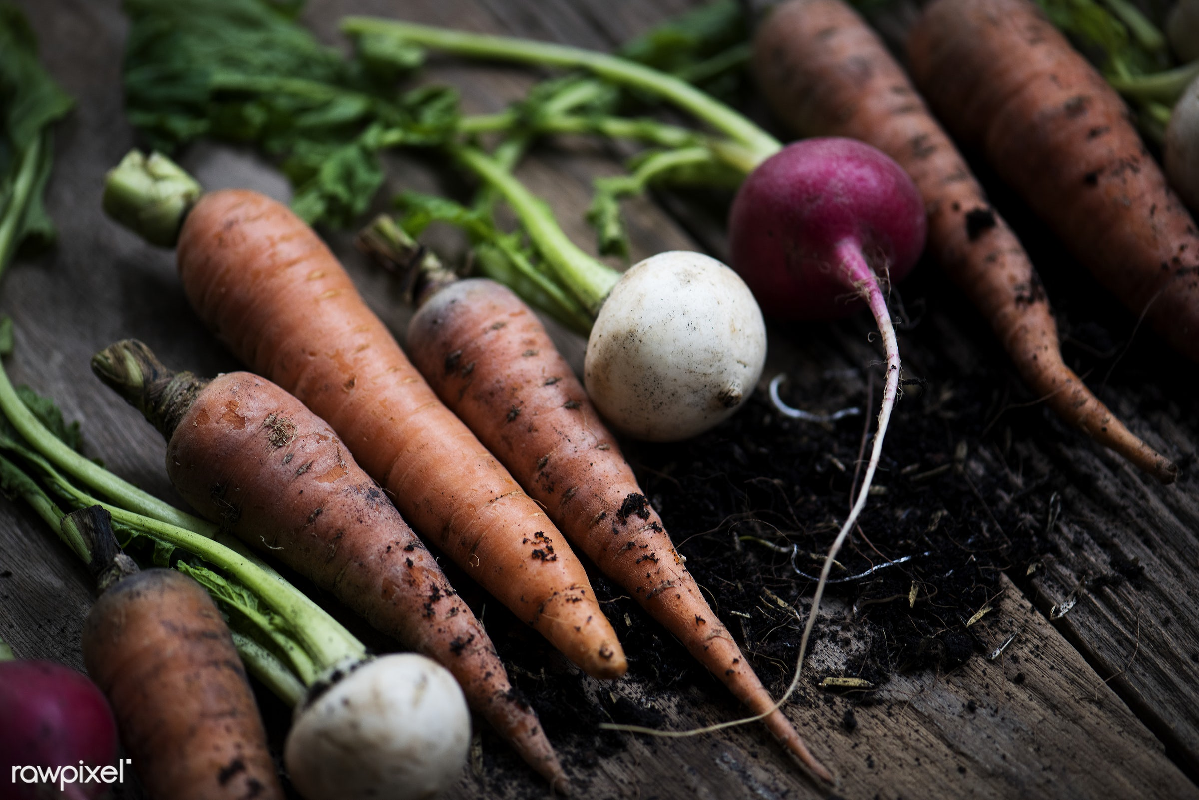 Carrots and beets - raw, nobody, set, ingredients, farm, nature, fresh, wooden background, various, pile, dirt, products,...