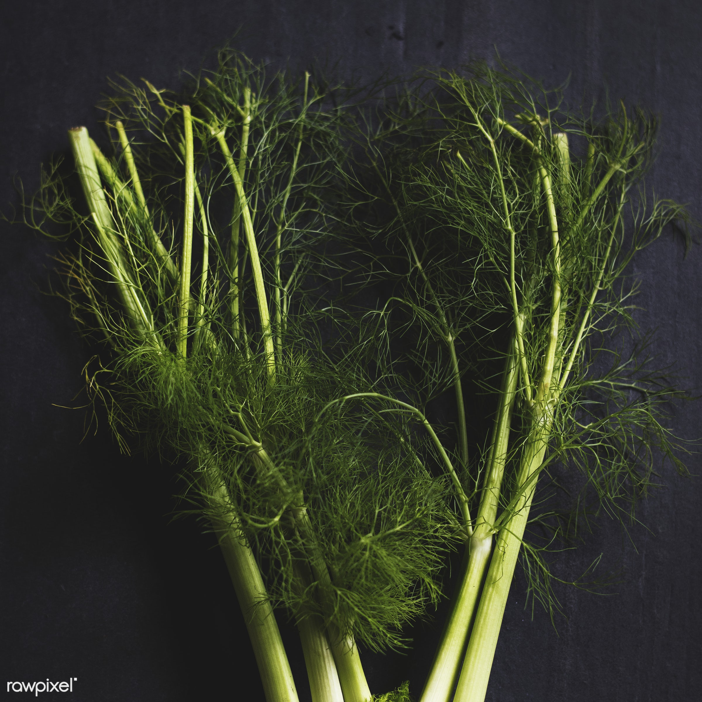 plant, raw, nobody, fennel, dill, leaf, ingredients, farm, black background, nature, fresh, ingredient, aerial view,...