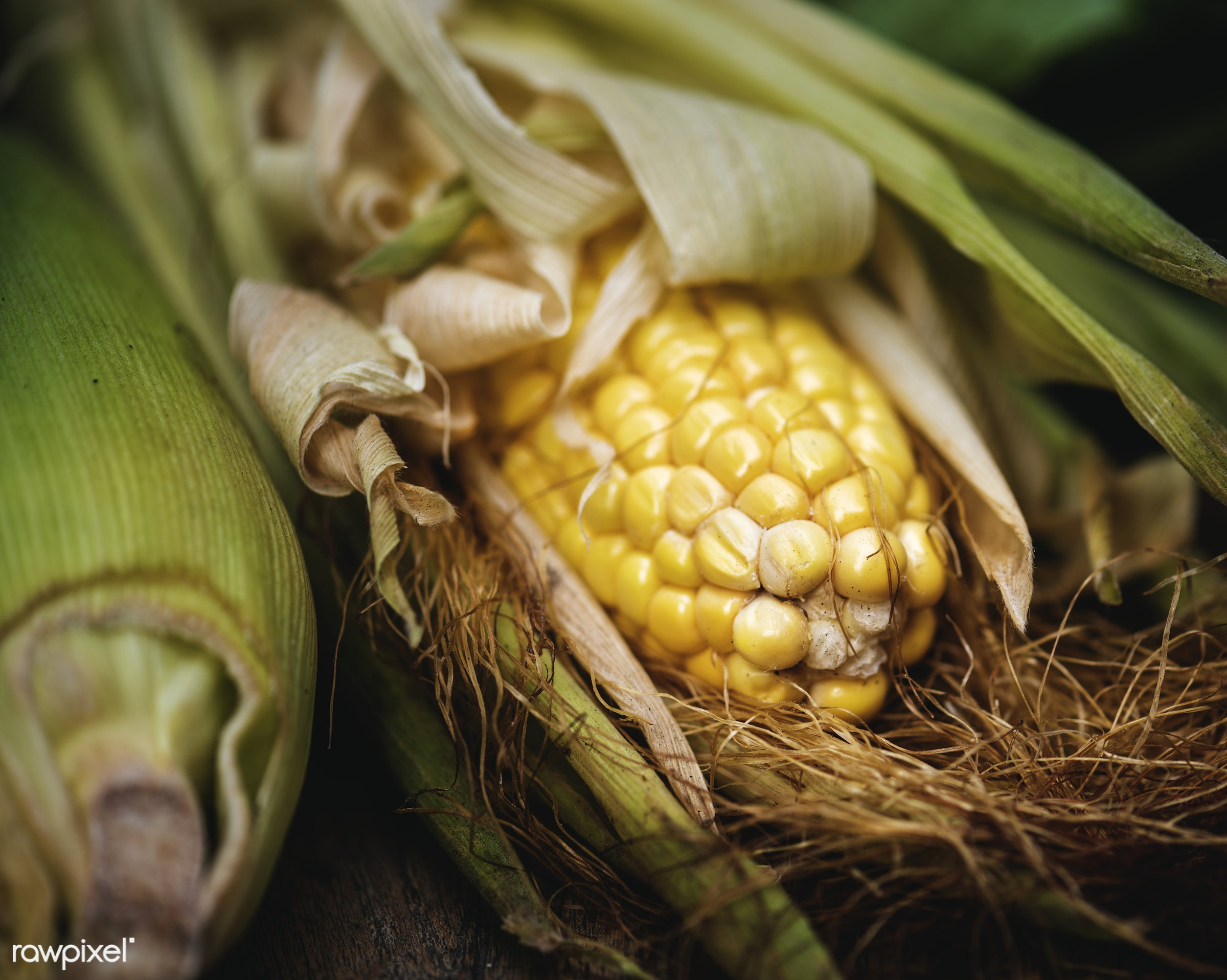 Sweetcorn - raw, plant, nobody, maize, corn, crop, farm, ingredients, sweetcorn, nature, fresh, ingredient, husk, products,...
