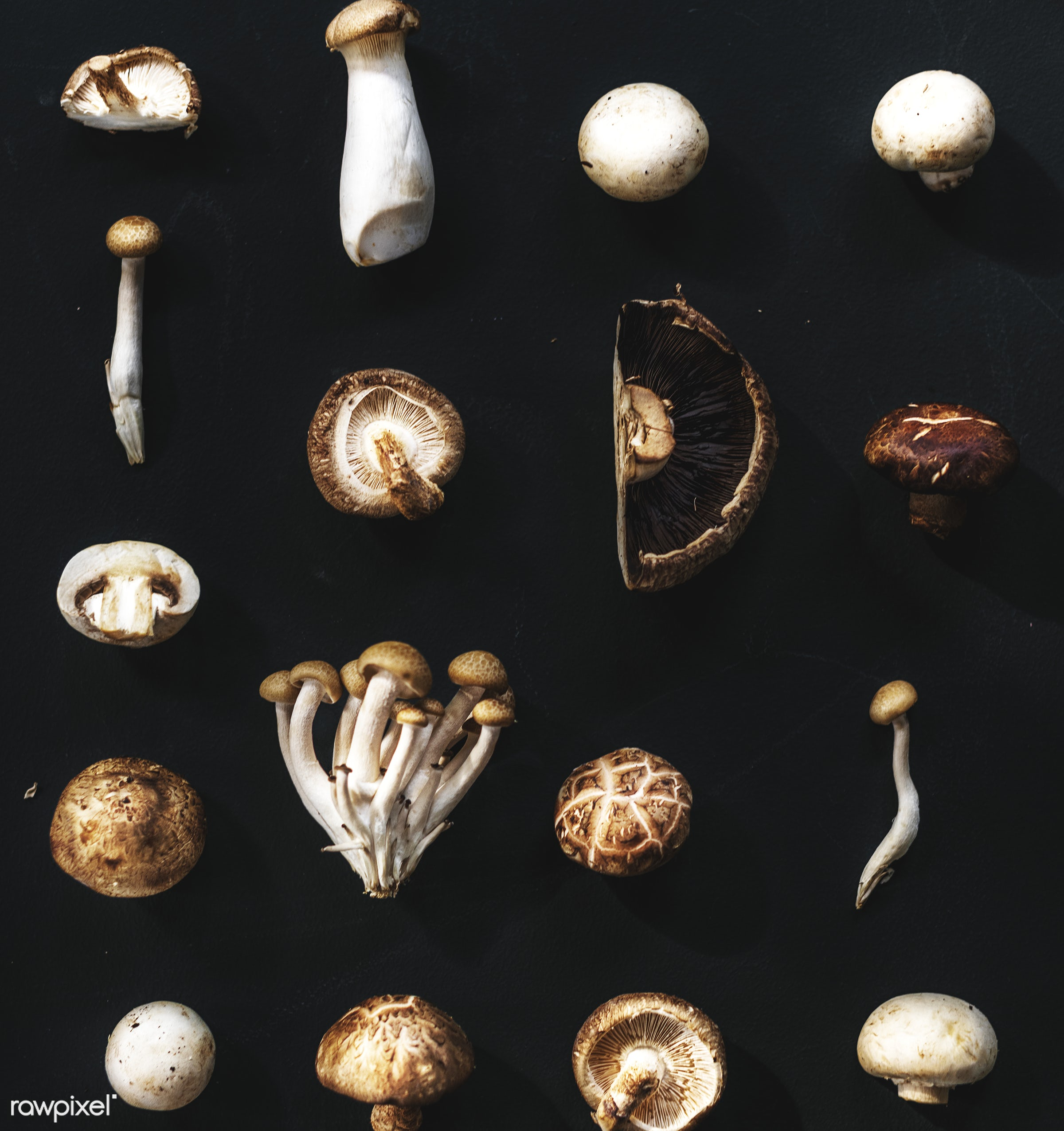 Different varieties of mushrooms - raw, plant, mushroom, nobody, set, shiitake, white button, collection, type, kind, black...