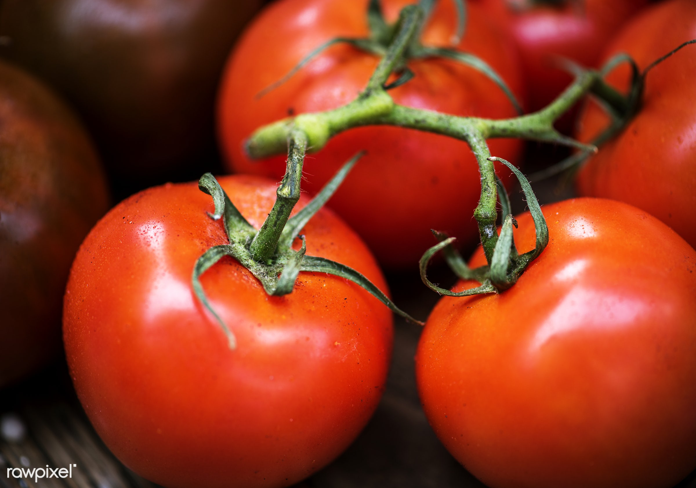 Tomatoes - raw, nobody, agriculture, tomatoes, farm, real, organic, nature, fresh, food, healthy, harvest, vegetable,...