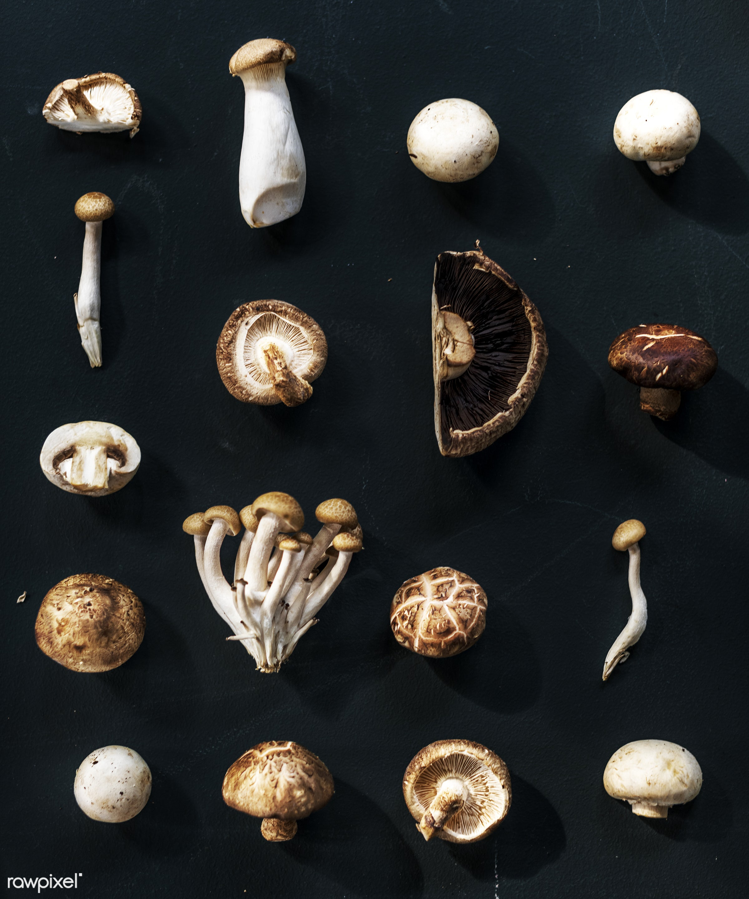 raw, plant, mushroom, nobody, set, shiitake, white button, collection, type, kind, black background, farm, ingredients, real...
