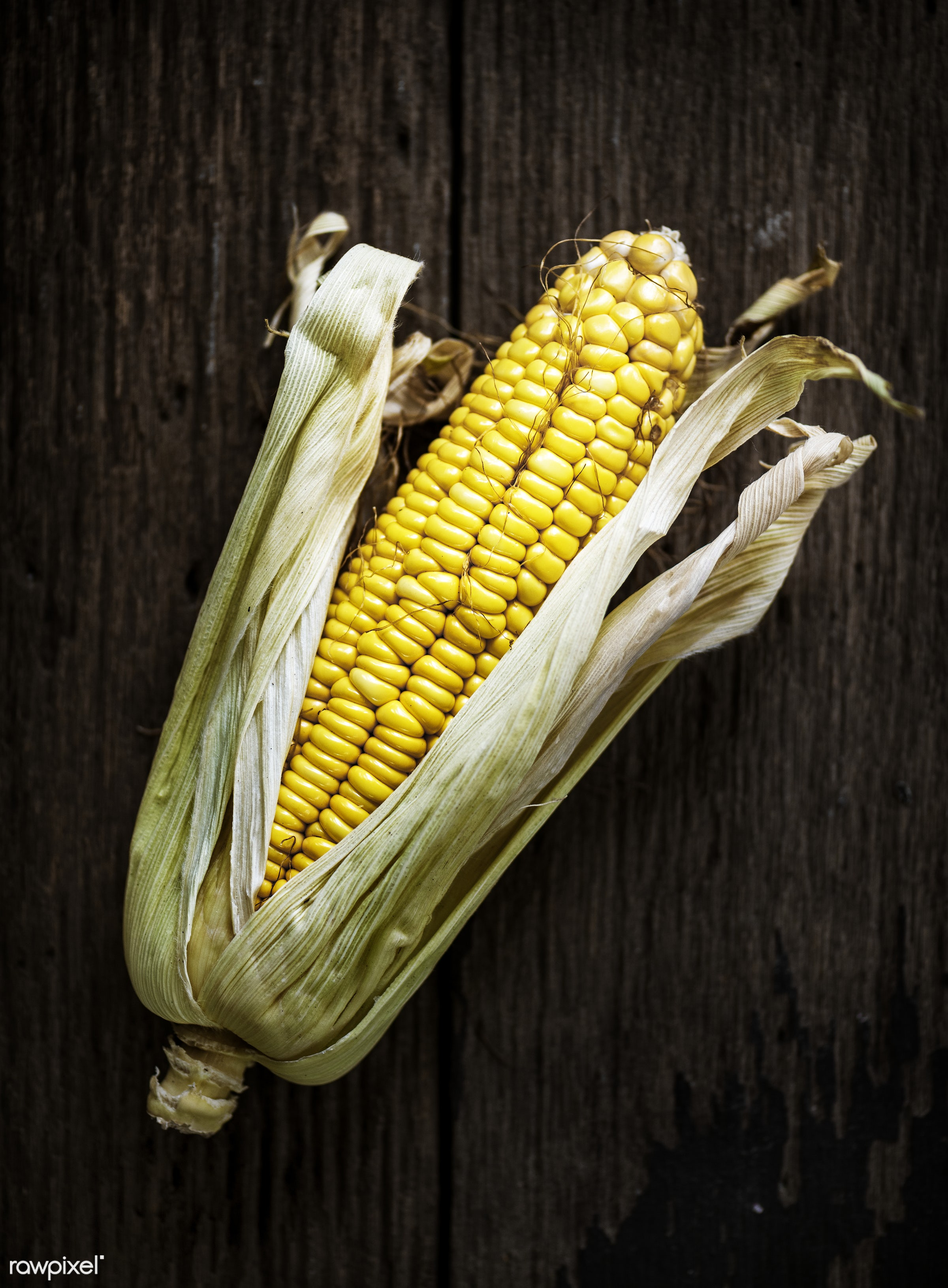 raw, plant, nobody, maize, corn, crop, farm, ingredients, sweetcorn, nature, fresh, ingredient, husk, products, closeup,...