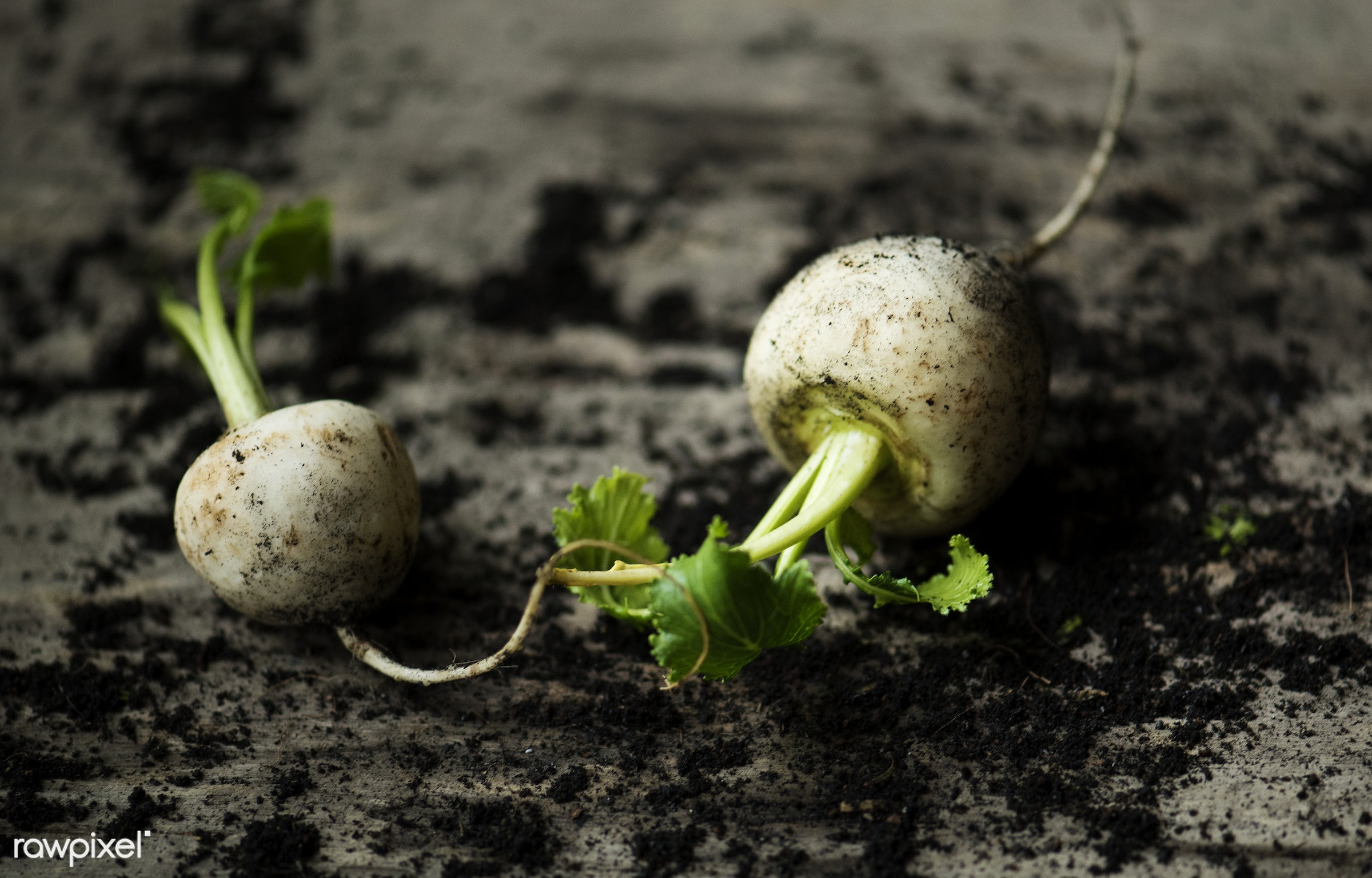 raw, nobody, leaves, real, nature, fresh, dirt, closeup, roots, white, radish, beets, organic, vegetable, wooden table, soil