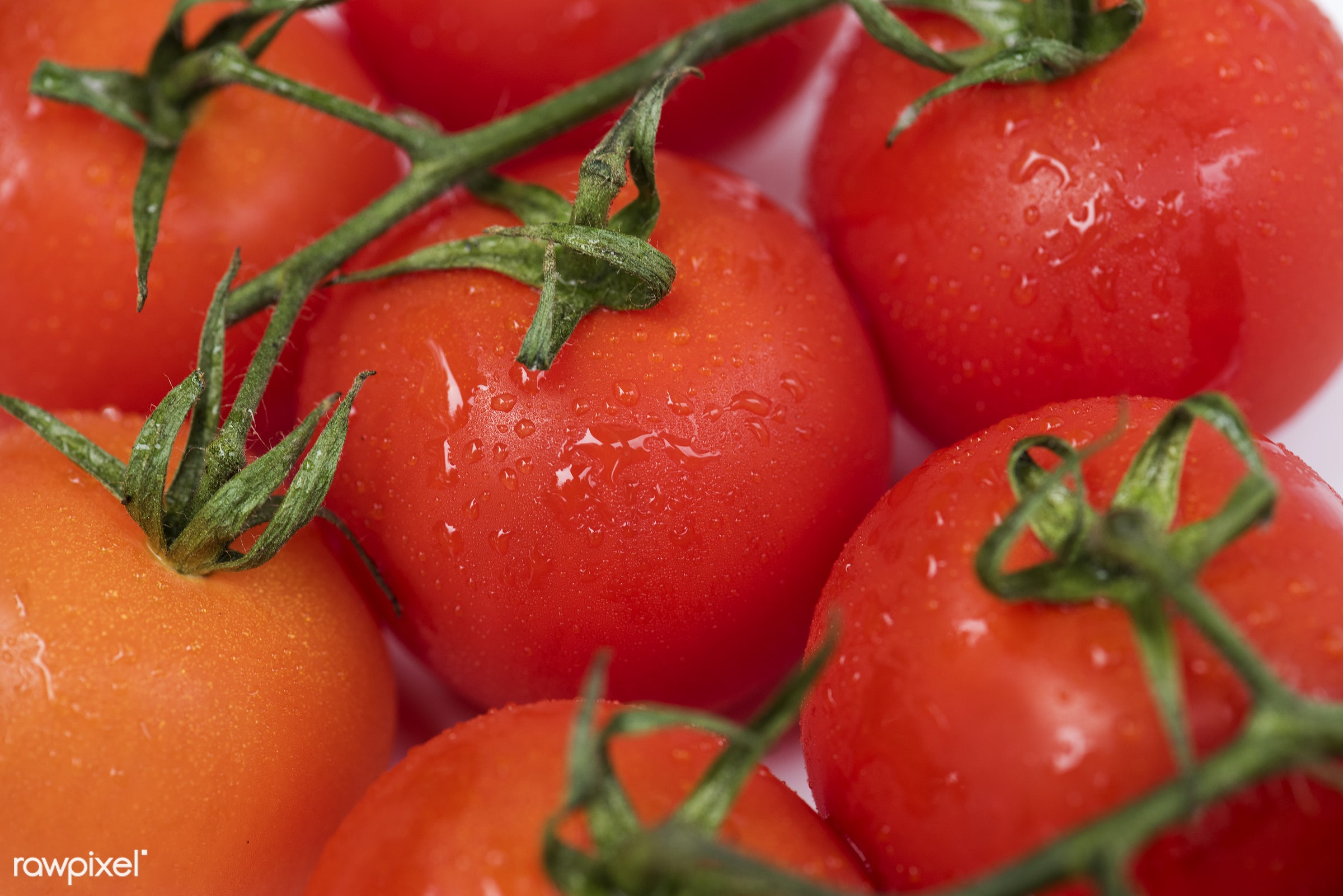 Fresh tomatoes - raw, plant, tomato, real, organic, red, nature, fresh, food, background, ripe, cultivated, ingredient,...