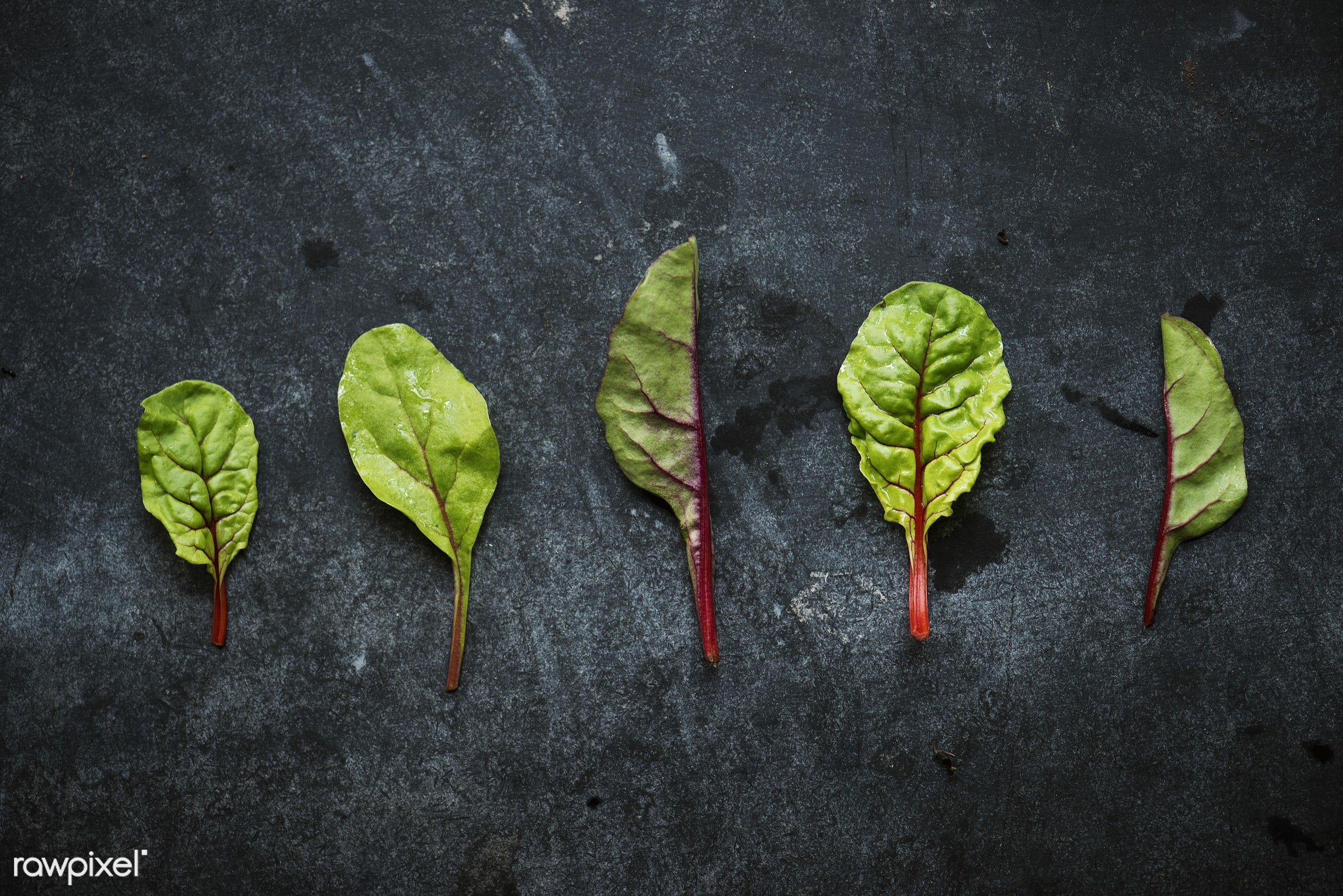 salad, raw, plant, nobody, mangold, leaves, red chard, black background, real, organic, nature, fresh, food, background,...