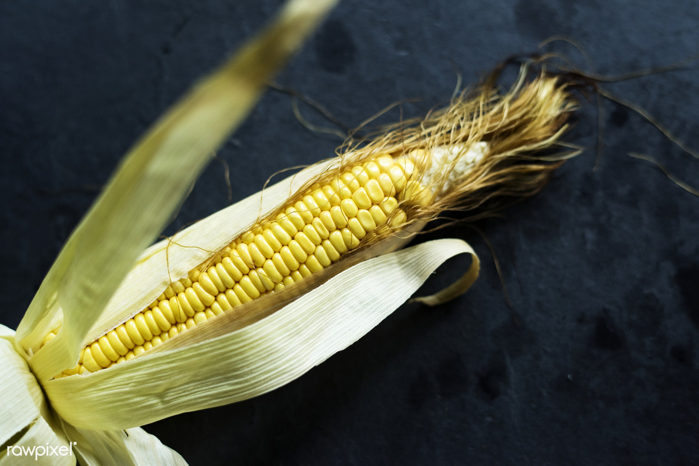 raw, plant, maize, agriculture, yellow, corn, organic, nature, fresh, grains, ripe, stalk, harvest, closeup