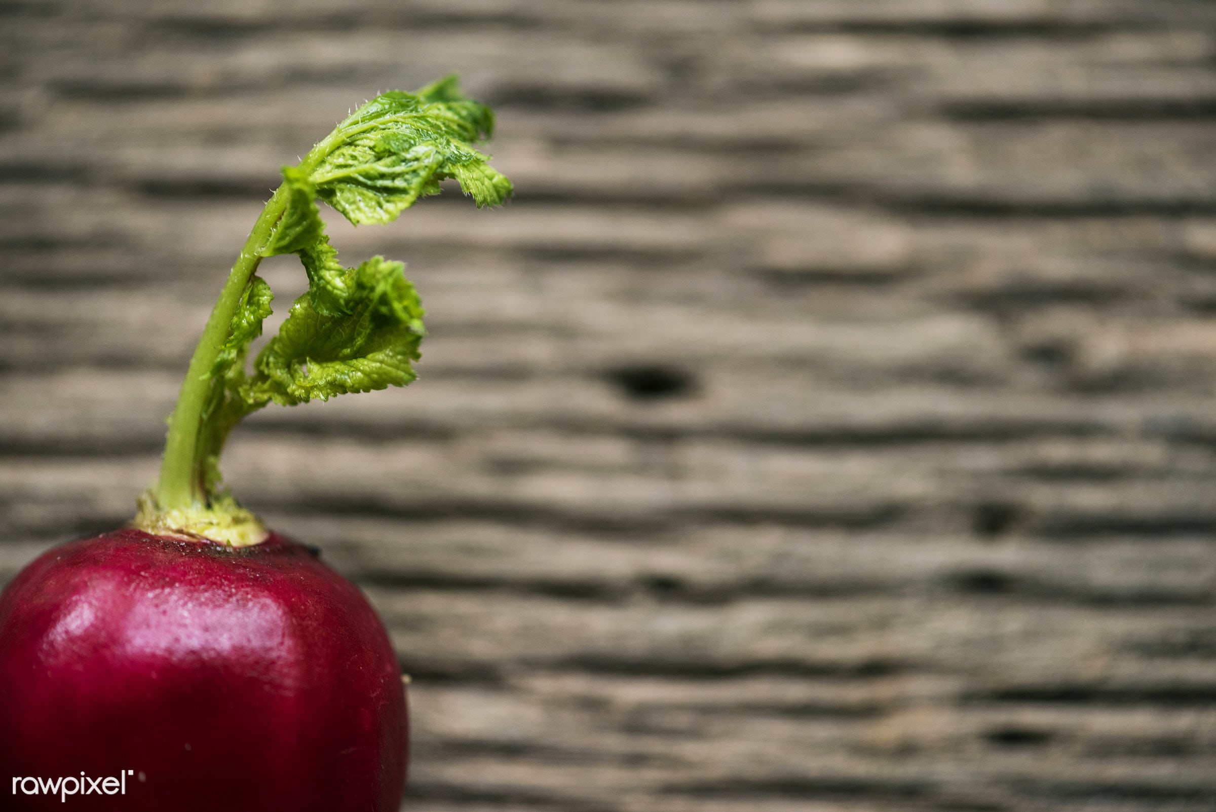 raw, nobody, roots, leaves, radish, real, beets, organic, red, nature, fresh, vegetable, closeup, wooden table