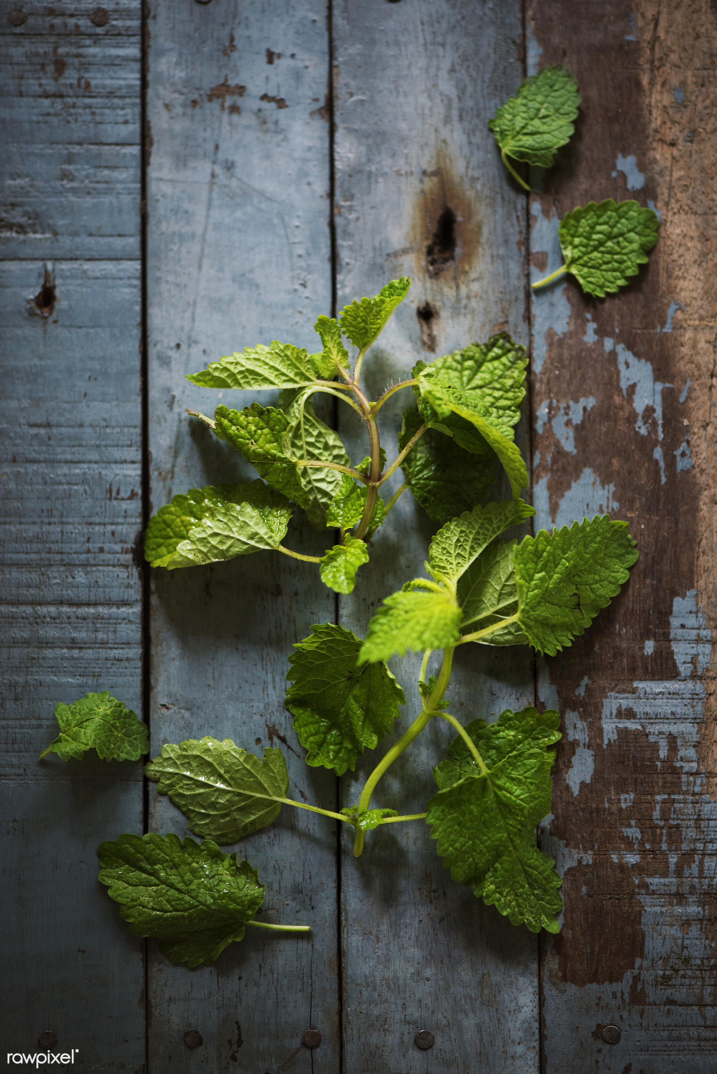 plant, nobody, herbs, leaves, taste, spices, asian, ingredients, real, nature, fresh, closeup, green, mint, vegetable,...