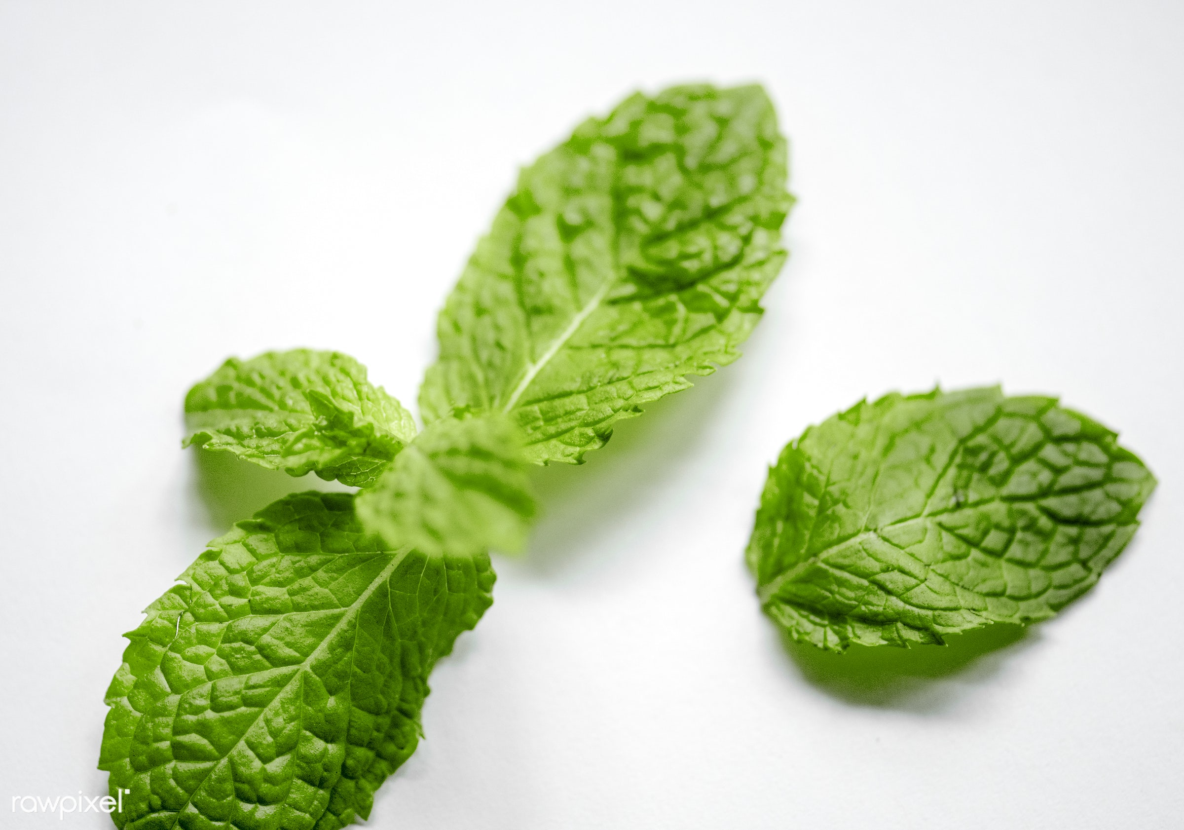 Peppermint leaves cooking herb - plant, nobody, herbs, isolated on white, leaves, spices, taste, asian, ingredients, real,...