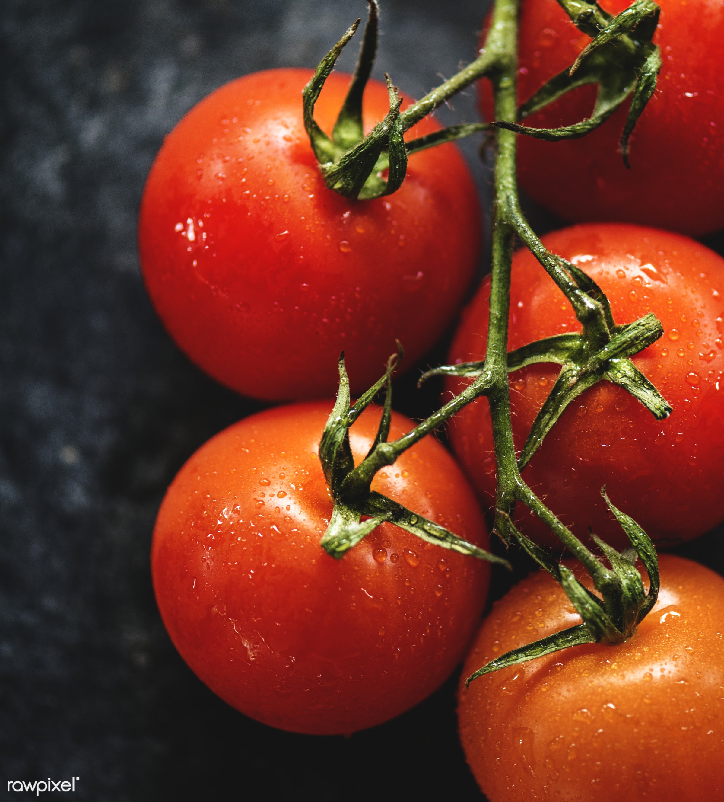 Fresh tomatoes - raw, plant, nobody, tomato, real, organic, red, nature, fresh, food, background, ripe, cultivated,...