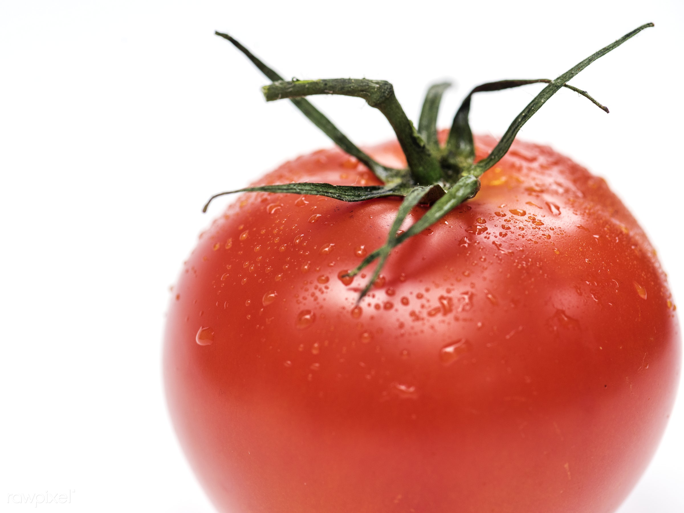 Fresh tomatoes - raw, plant, isolated, tomato, isolated on white, white background, real, organic, red, nature, fresh, food...