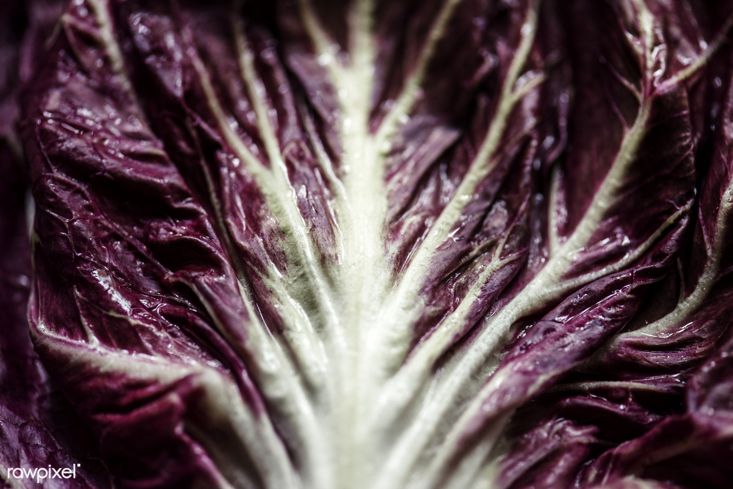 salad, raw, plant, nobody, radicchio, real, organic, red, nature, cabbage, fresh, background, healthy, vegetable, closeup
