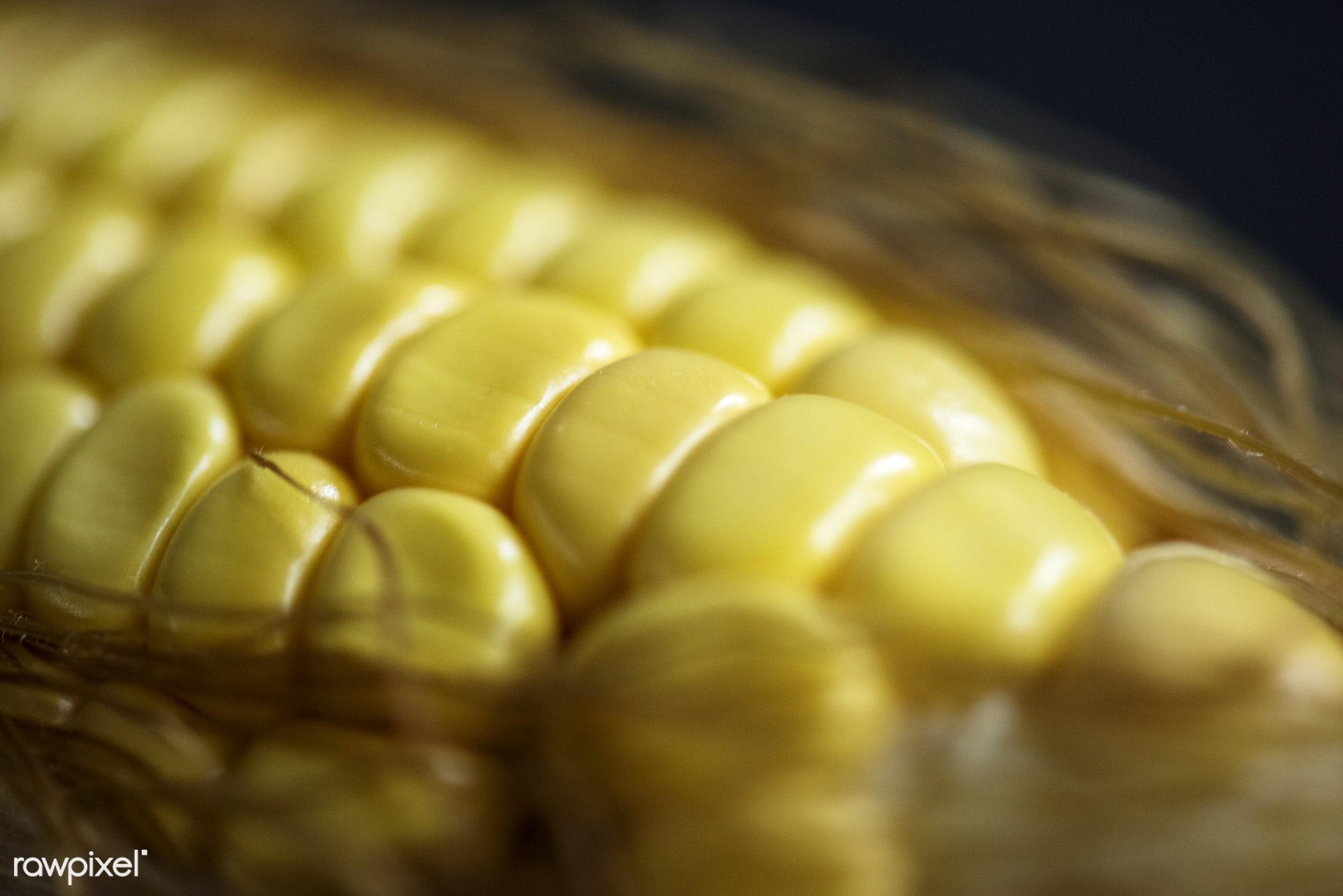 Macro shot of corn stalk - raw, plant, maize, yellow, corn, organic, nature, ripe, stalk, harvest, closeup, vegetable, macro