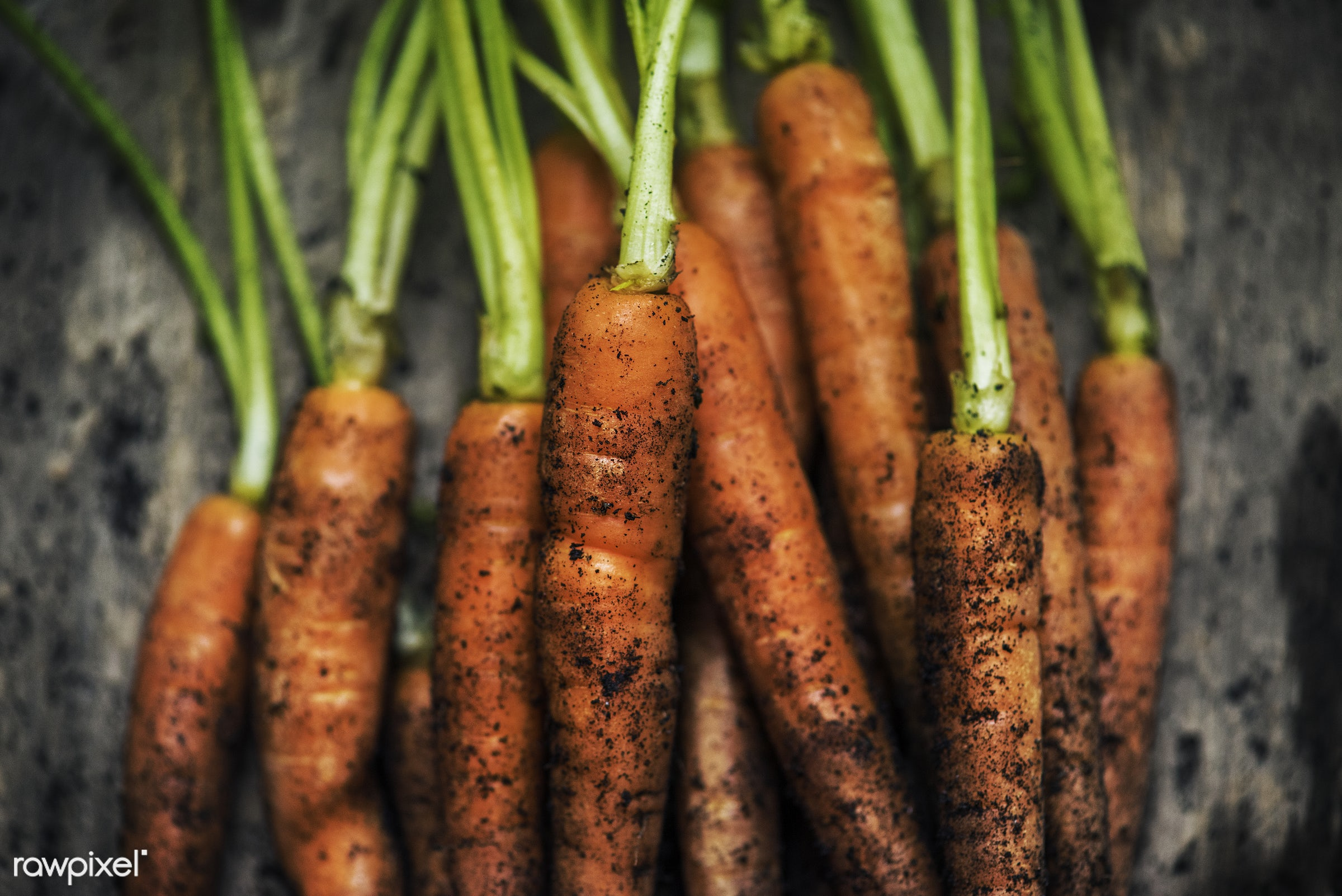 Fresh organic carrots - nutrients, real, organic, fresh, carrots, bunch, dirt, vegetable, closeup, soil