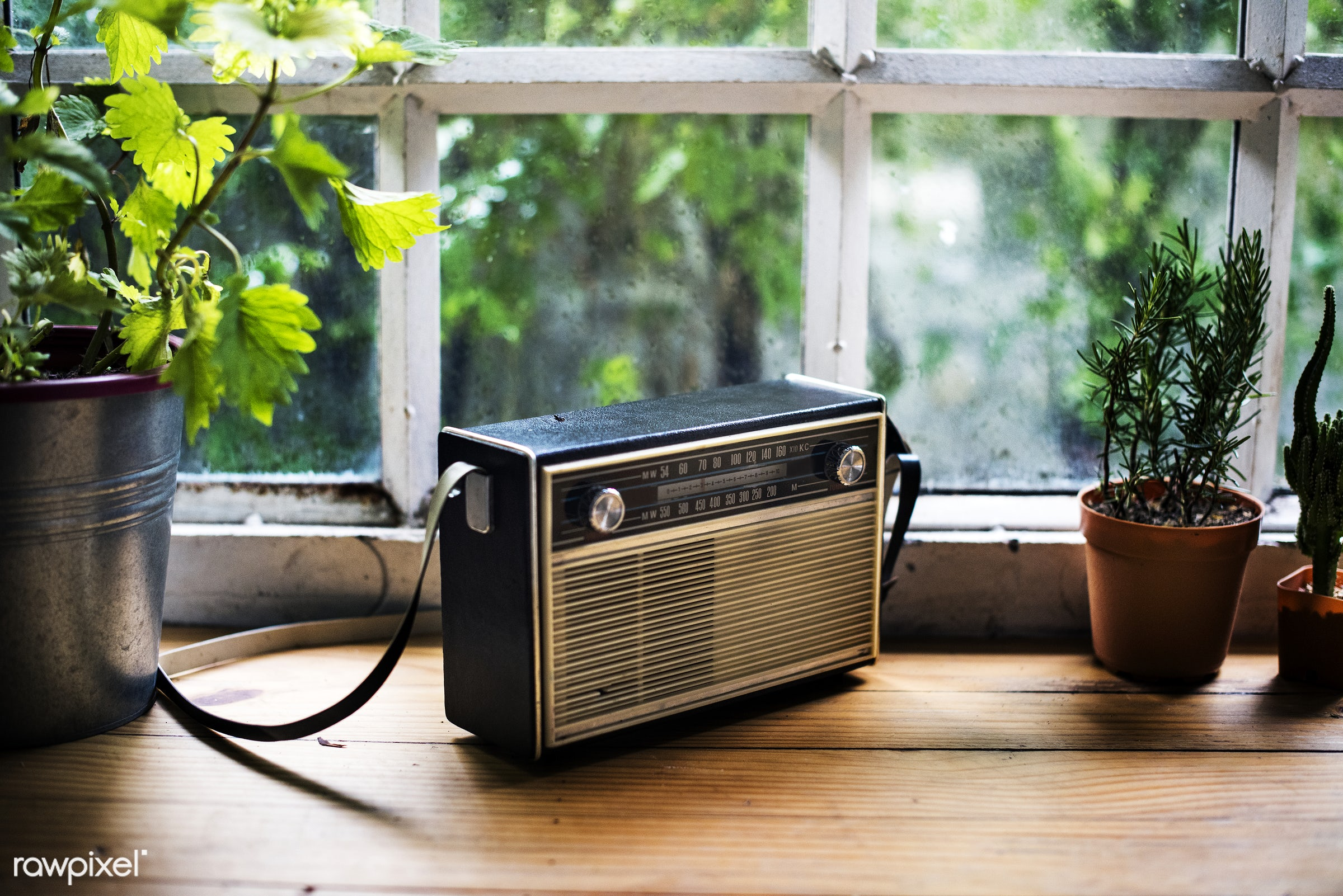 nobody, old school, plants, retro, nature, glass, objects, closeup, decoration, vintage, green, old-fashioned, window, radio...