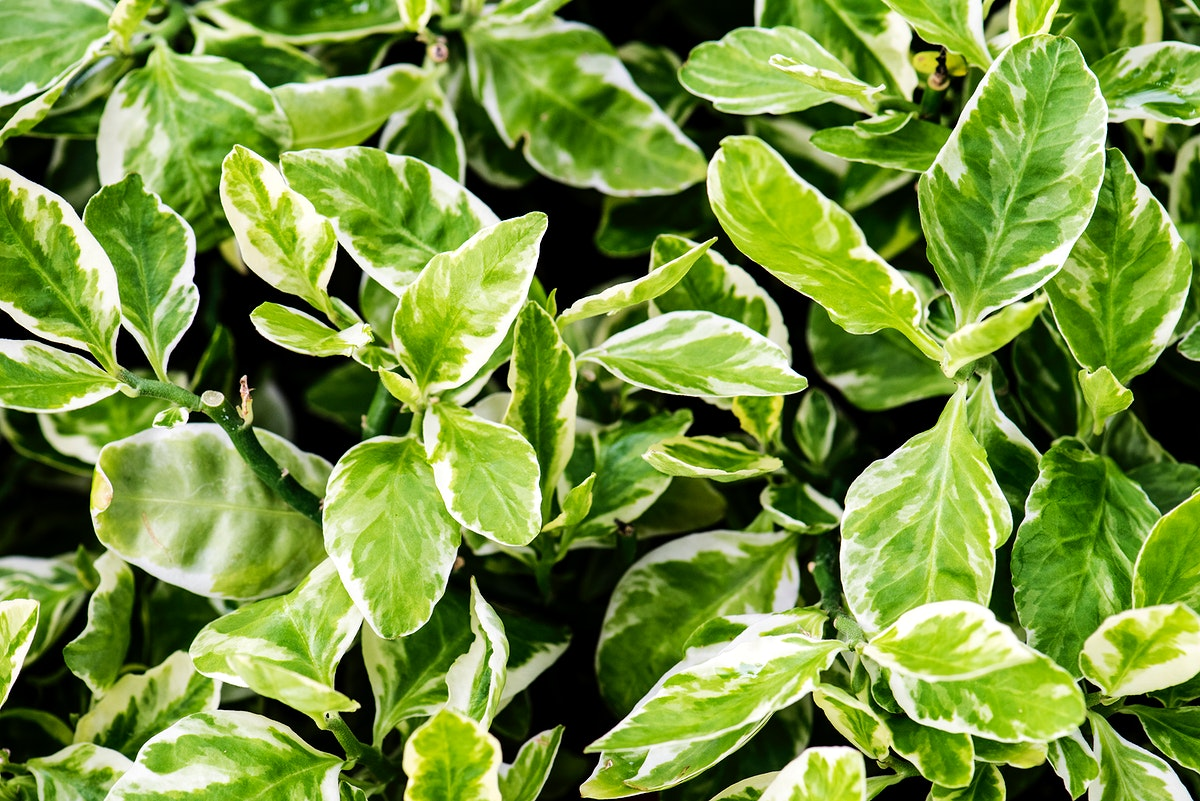 Closeup of real nature plant leaves