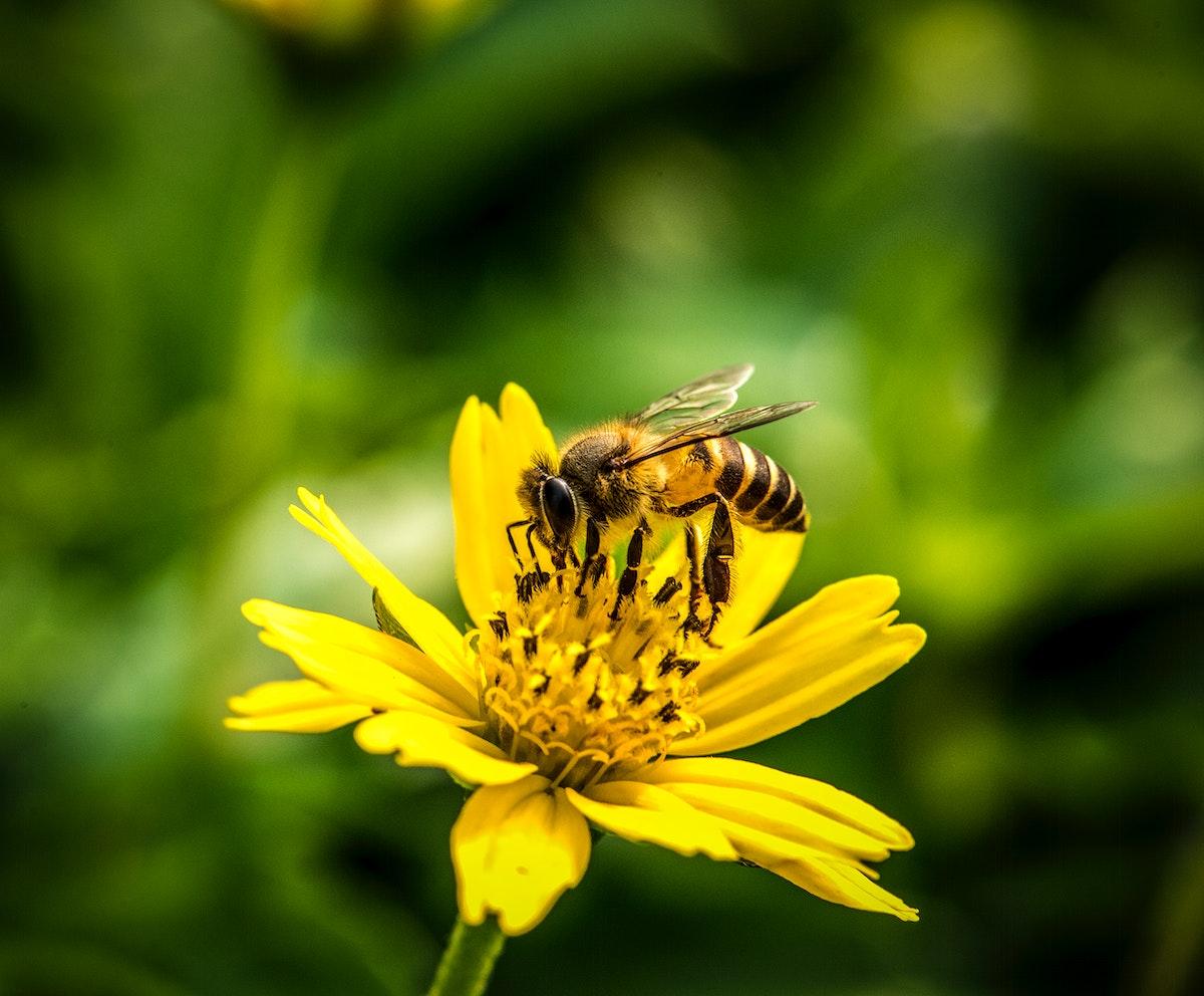 Macro of real nature flower botanic