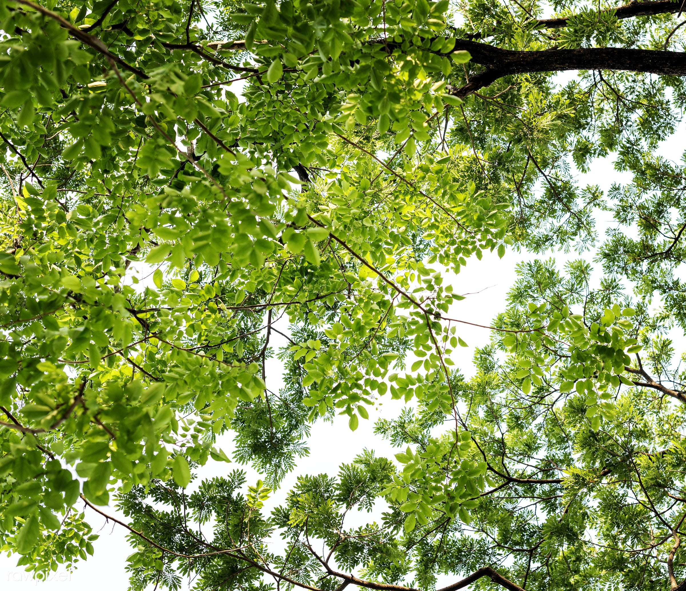 The tree tops in forest - spring, vacation, leaf, natural, serene, attraction, background, beauty in nature, branch,...