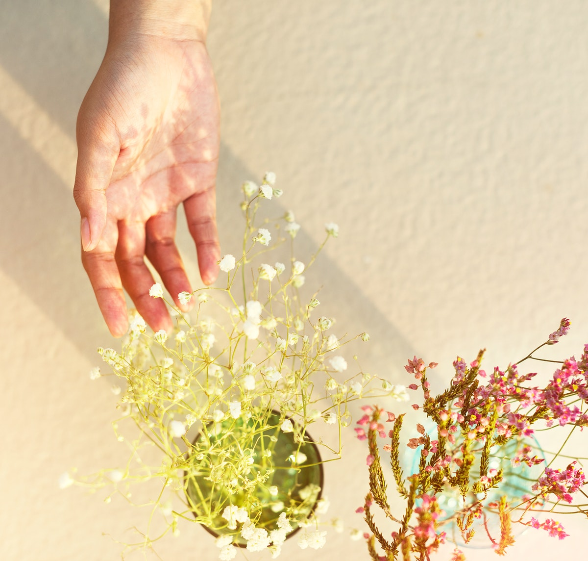 Aerial view of hand touching waxflower