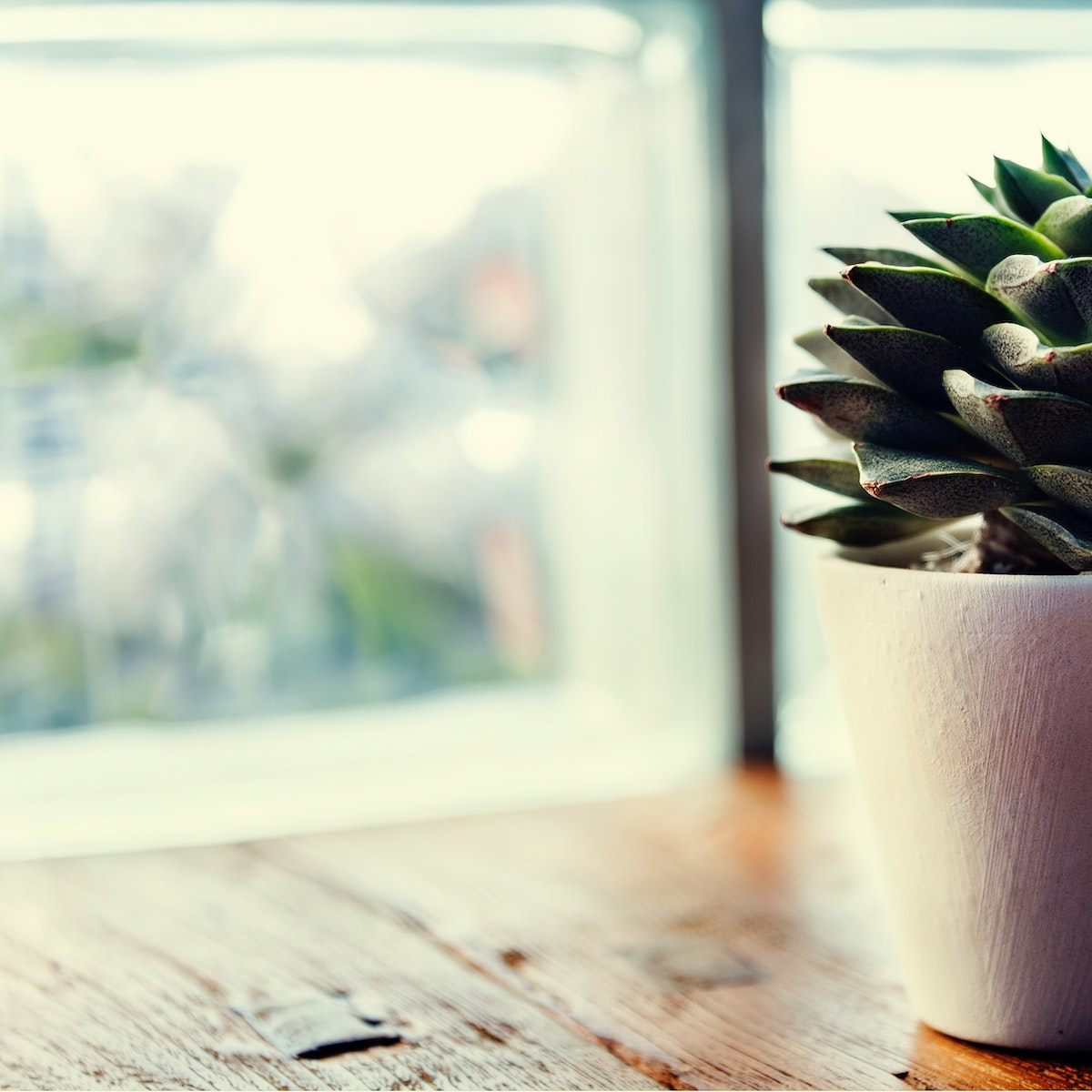 Closeup of succulent cactus in white pot on wooden table by the window