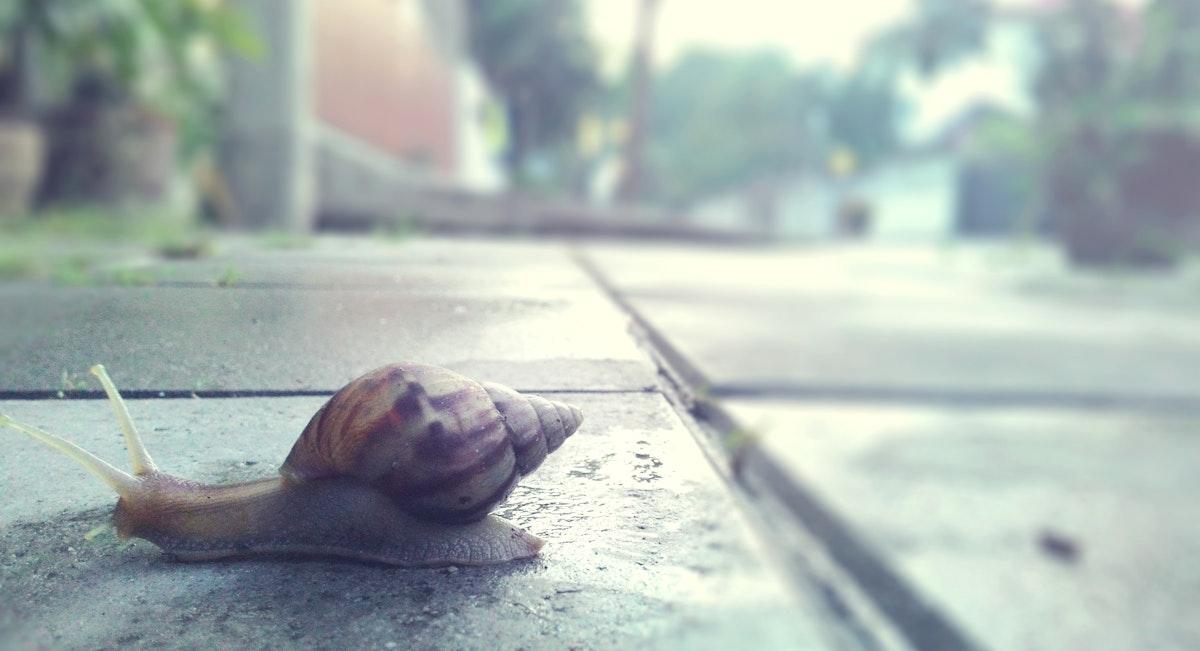 Closeup of snail crawling on the streetside