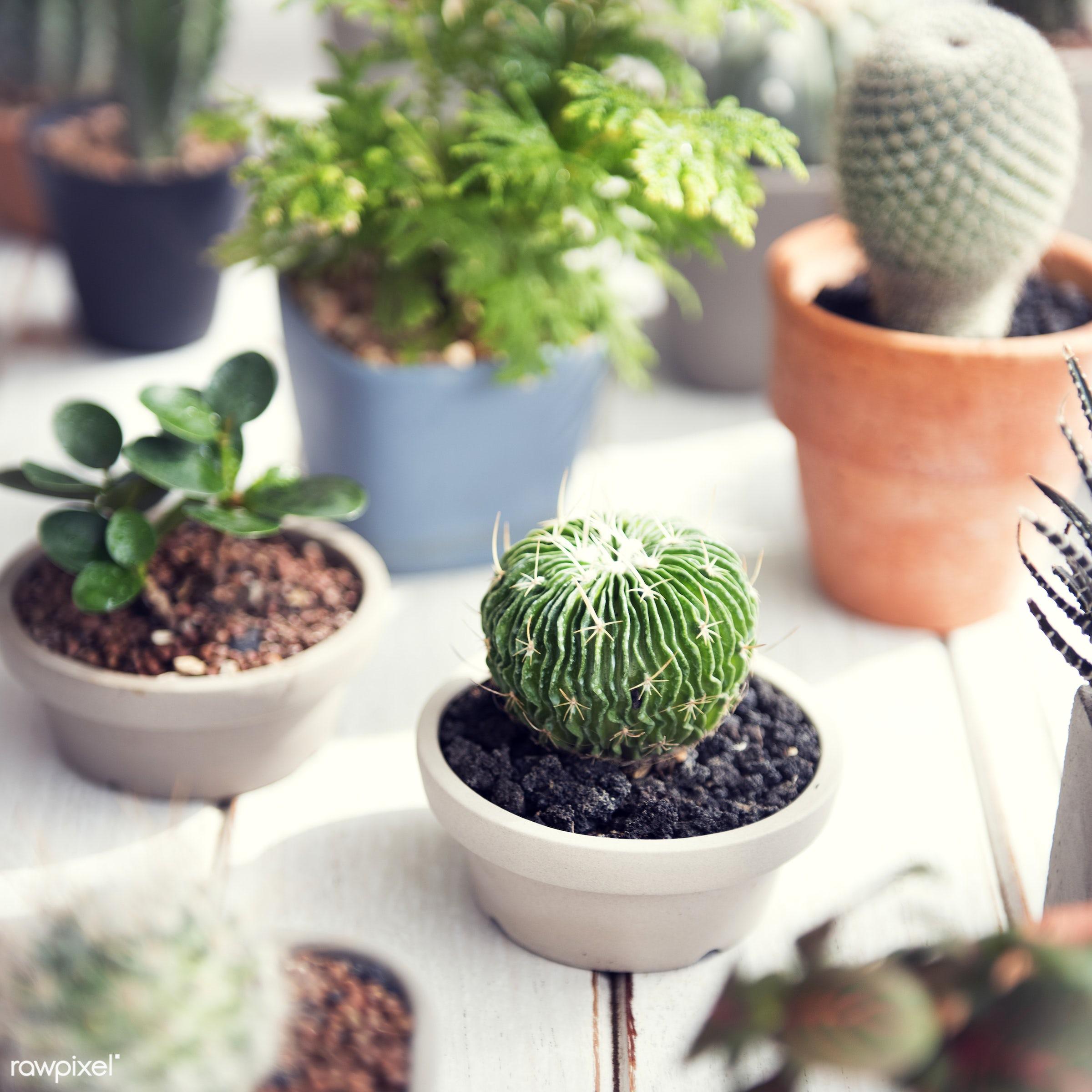 nobody, botany, green, plants, real, houseplants, pots, wooden table, closeup, cactus
