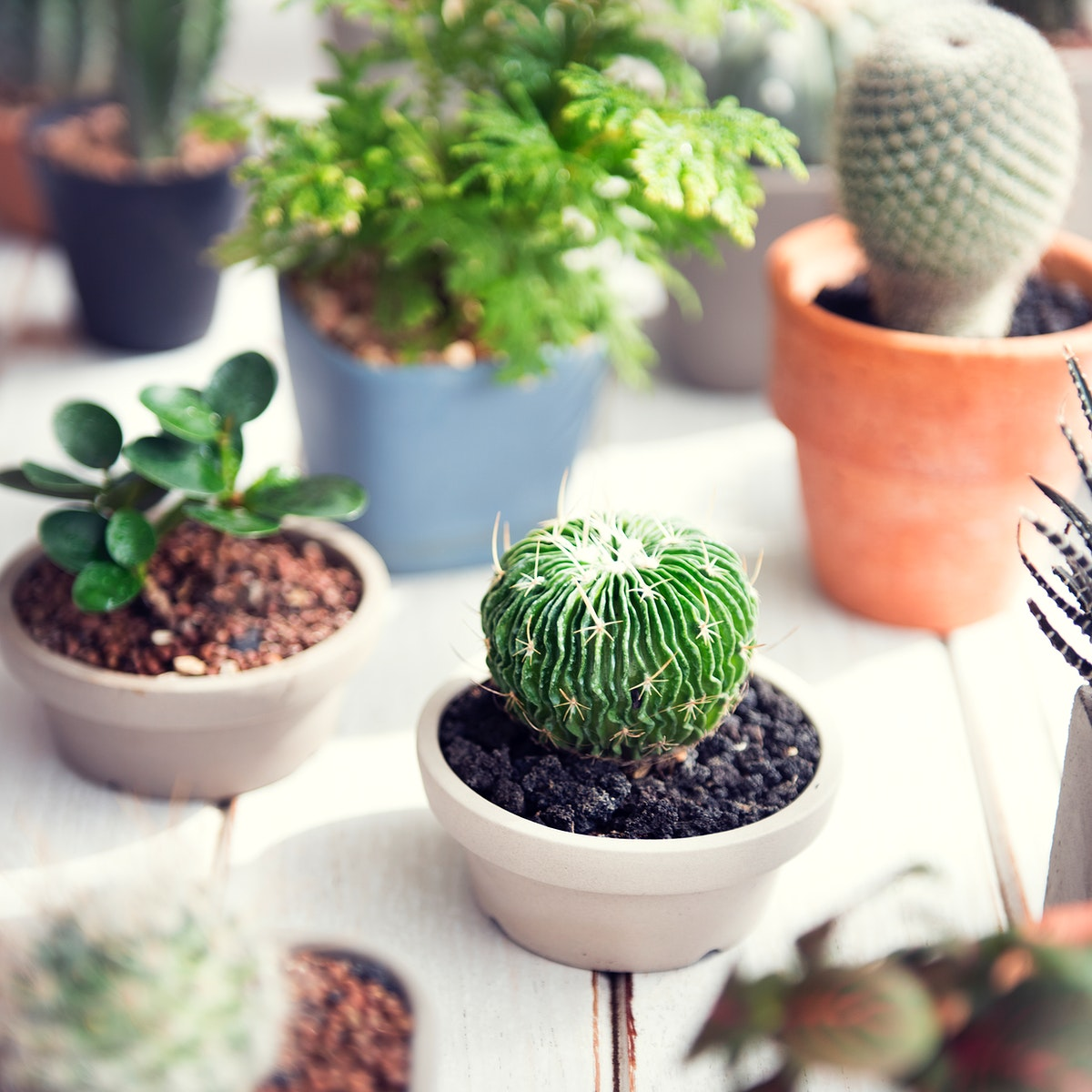 Closeup of houseplants on wooden table
